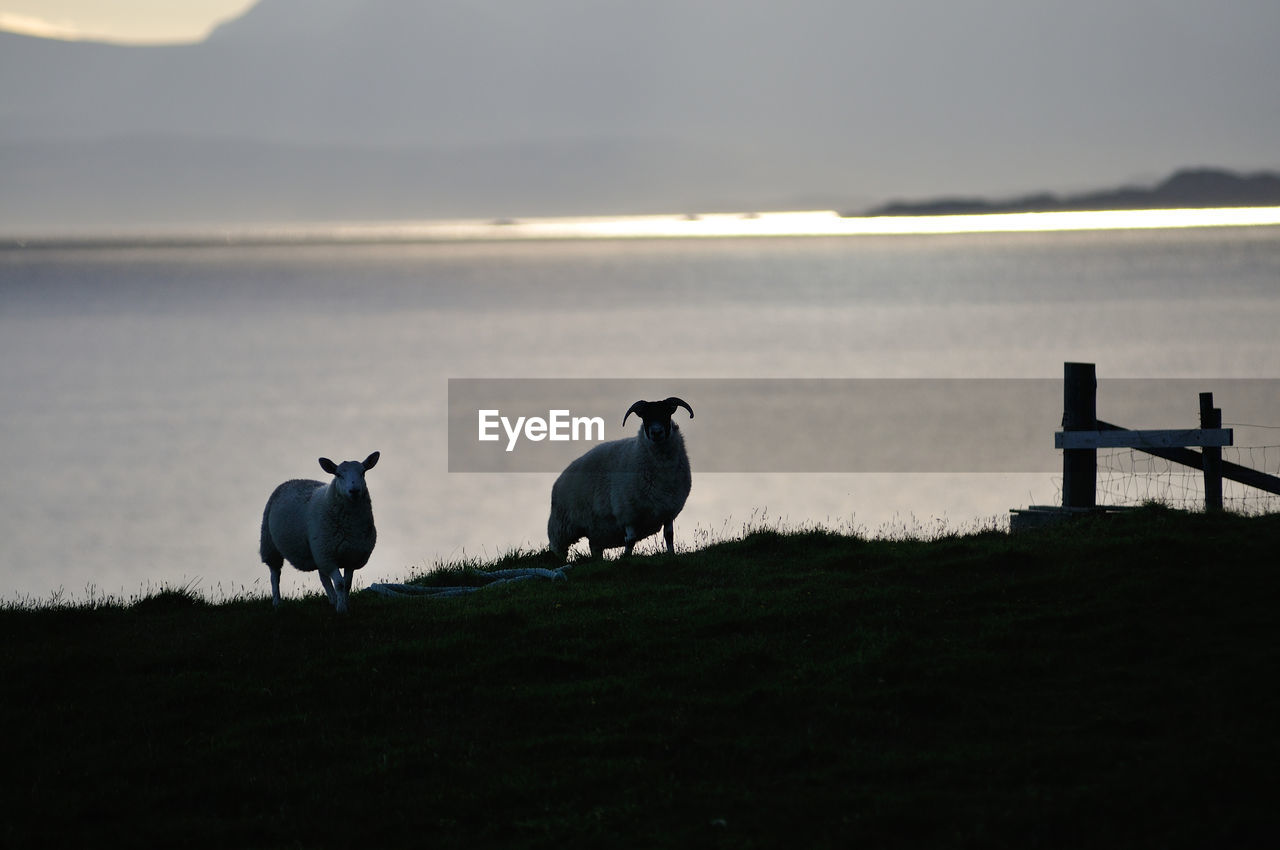 Scenic  View Of Sheep On Field