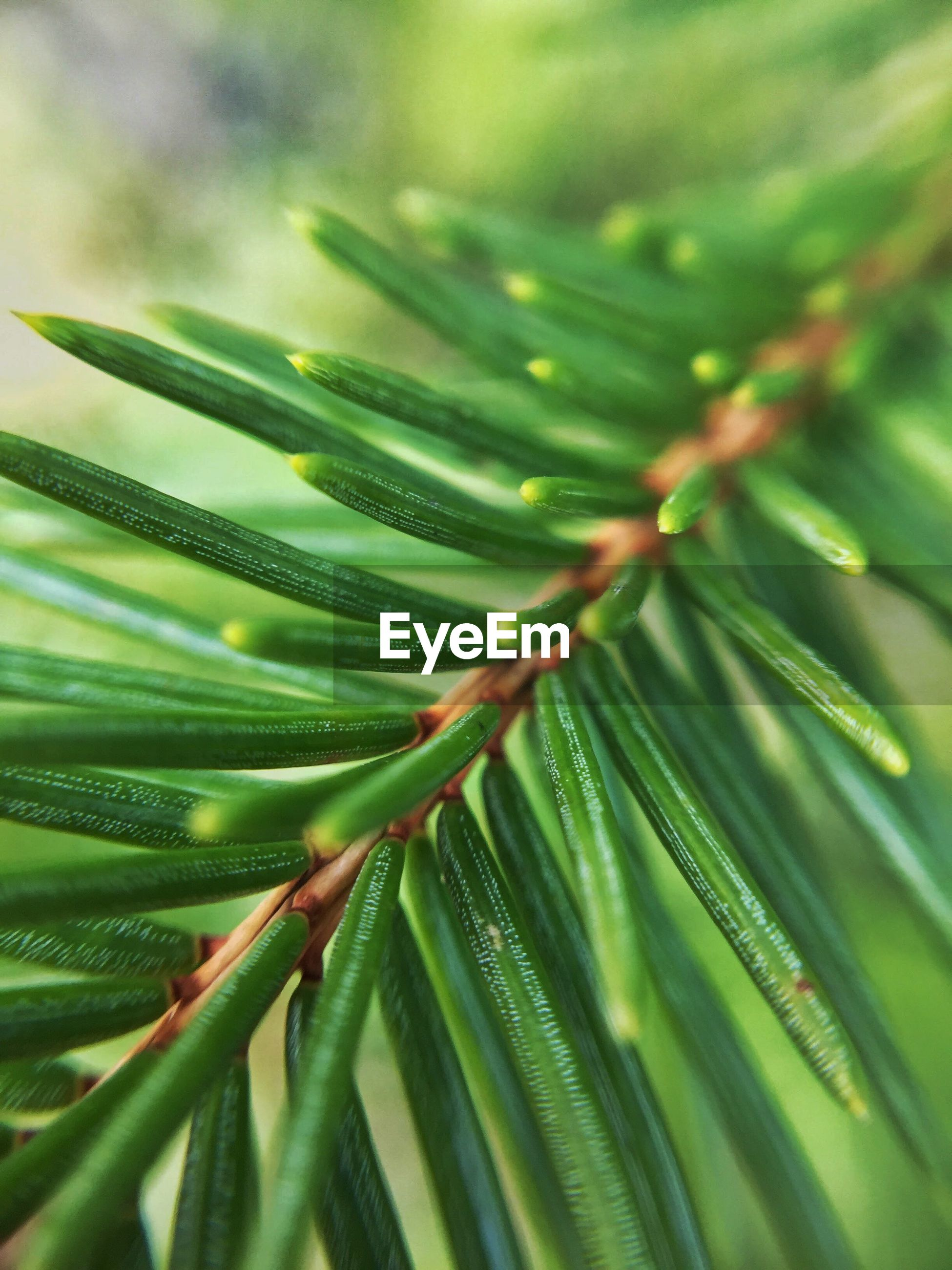 Close-up of pine plant