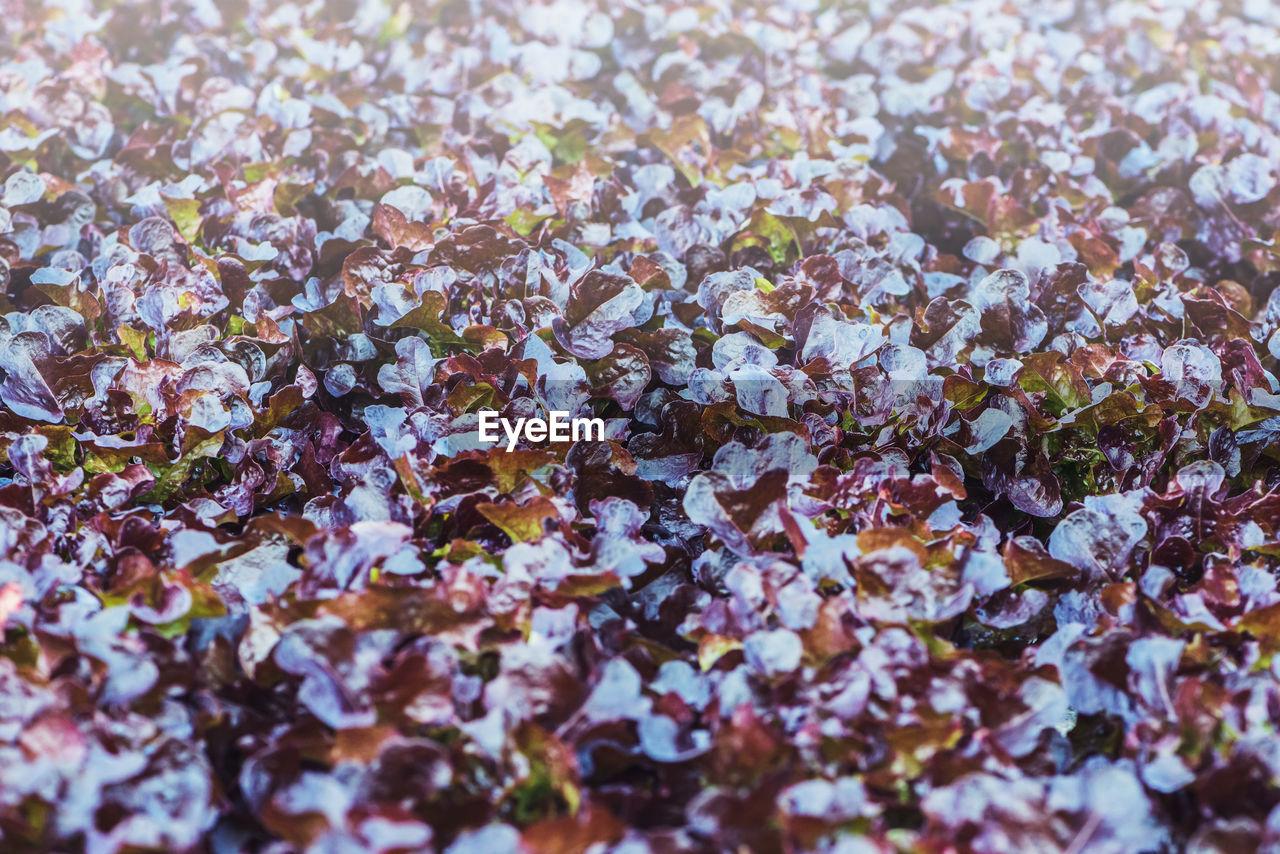 Full frame shot of flowering plants during autumn