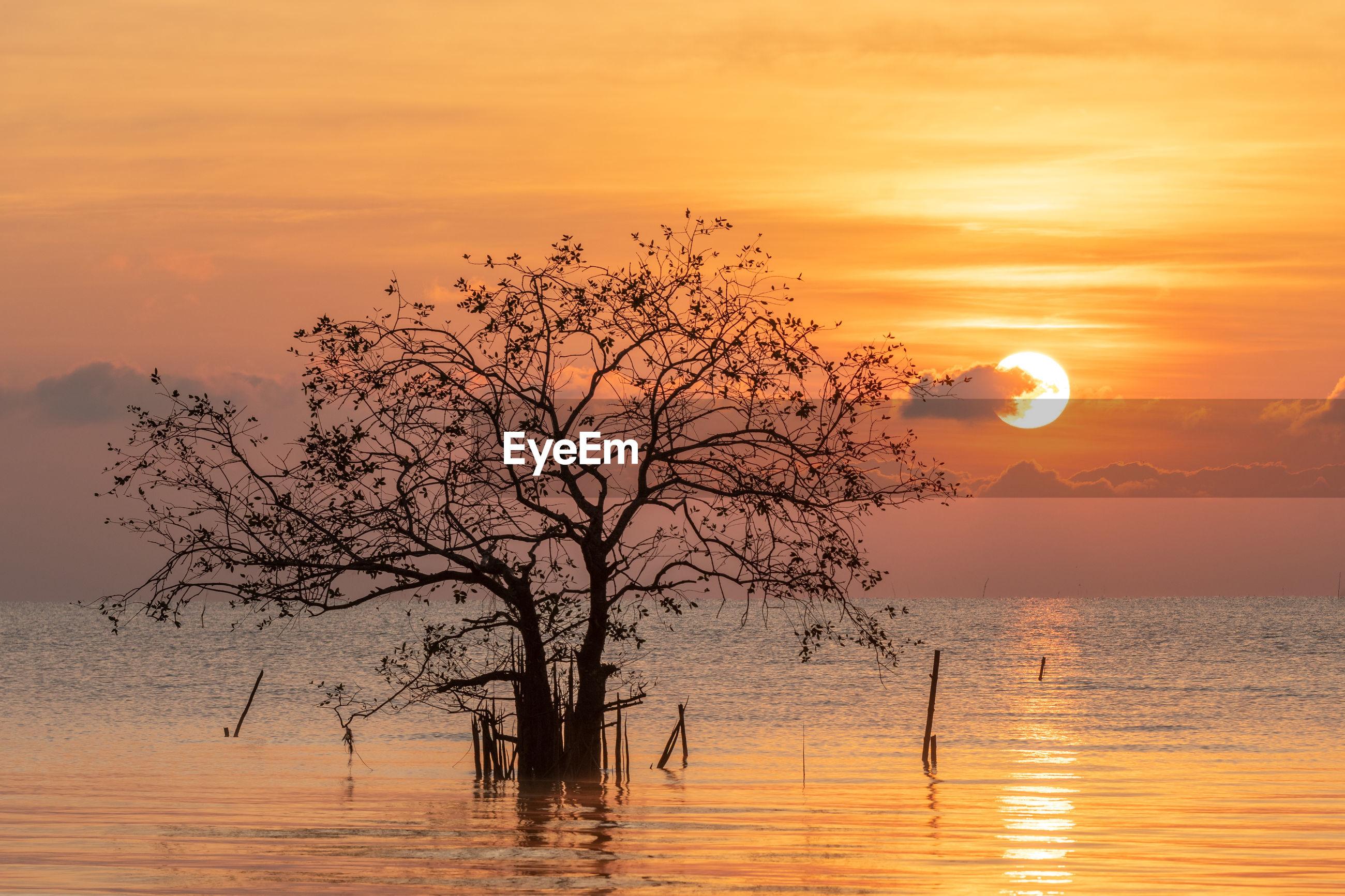 TREE BY SEA AGAINST ORANGE SKY