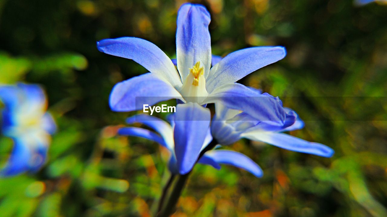 flower, petal, beauty in nature, nature, fragility, growth, flower head, freshness, outdoors, purple, blooming, plant, day, no people, close-up, blue, iris - plant, crocus