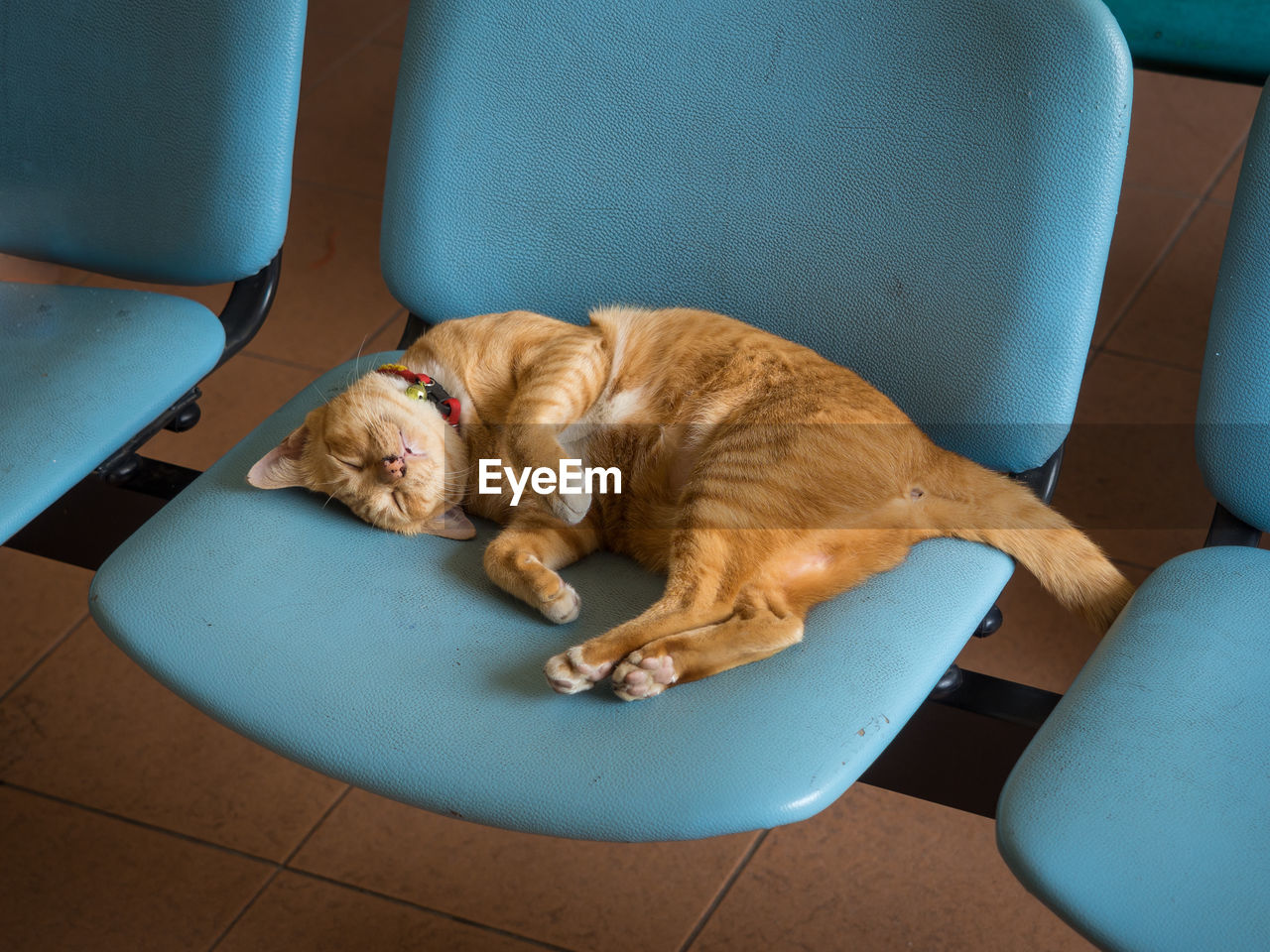 Cat Sleeping On Chair At Railway Station