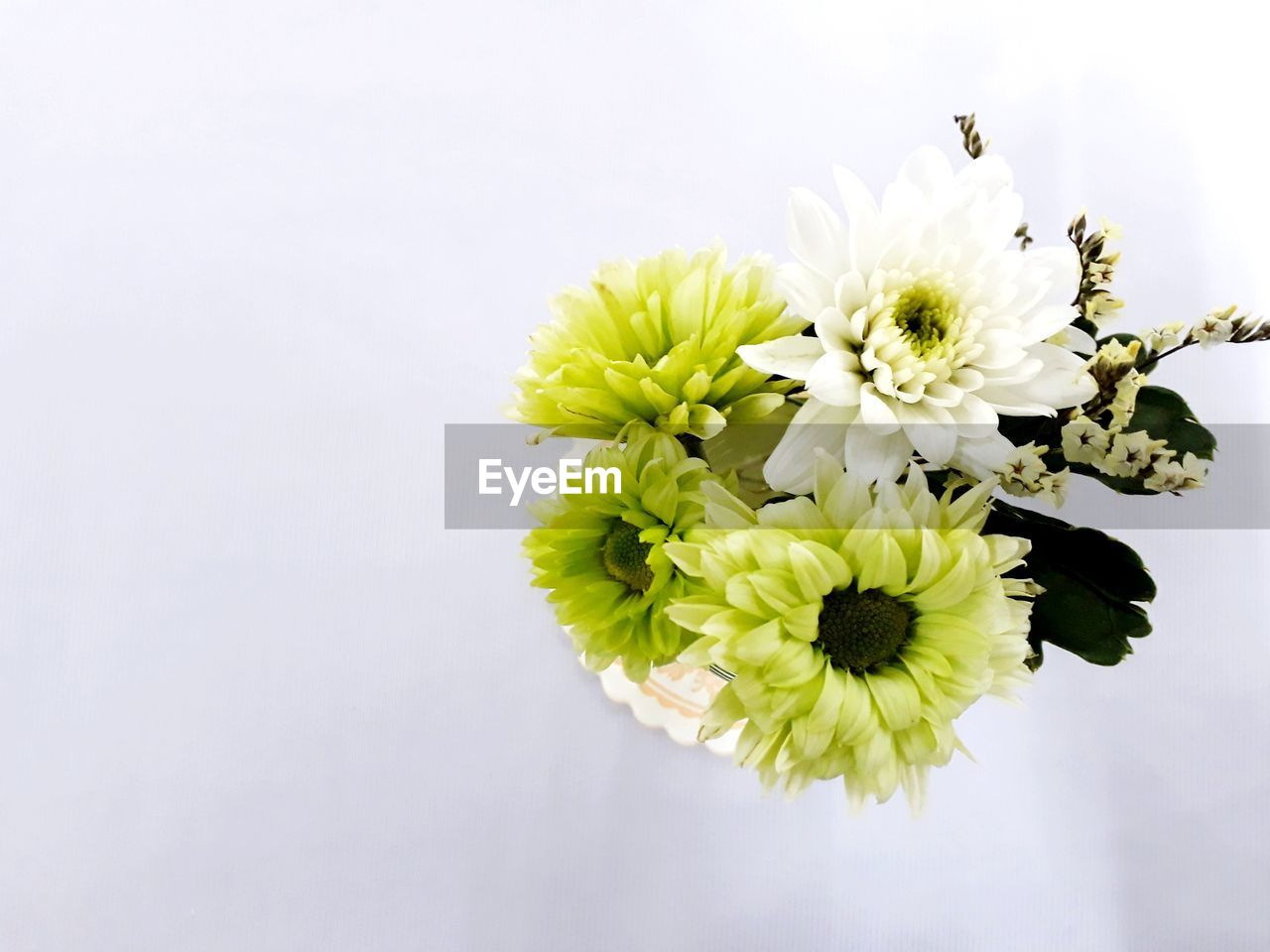 flower, flowering plant, freshness, vulnerability, beauty in nature, fragility, plant, petal, close-up, studio shot, white color, growth, no people, flower head, copy space, white background, inflorescence, nature, indoors, yellow, pollination