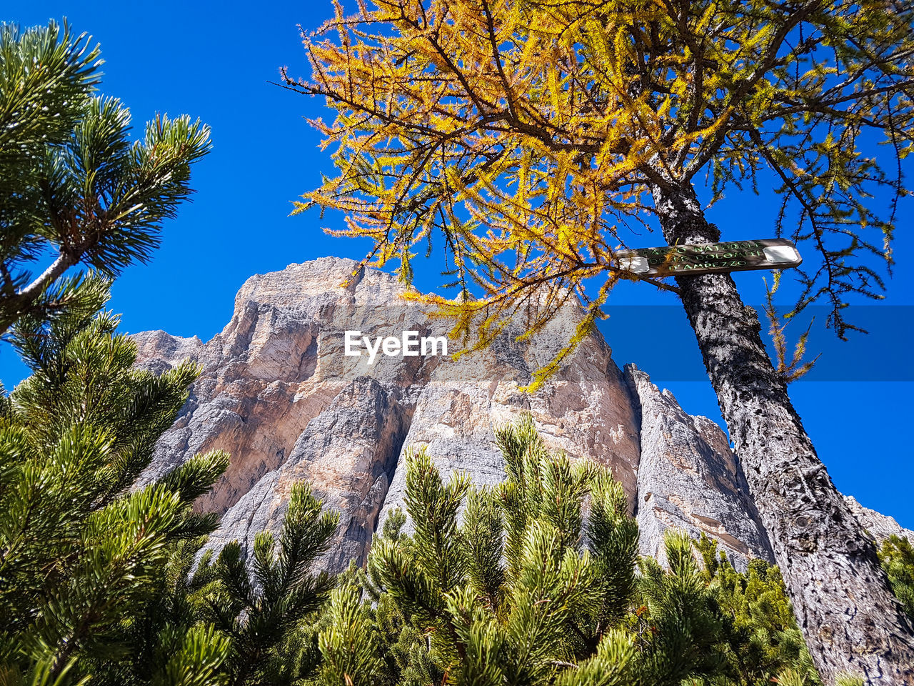 plant, tree, sky, low angle view, nature, beauty in nature, clear sky, branch, growth, tranquility, no people, day, blue, mountain, sunlight, scenics - nature, tranquil scene, rock, outdoors, rock formation, formation, eroded