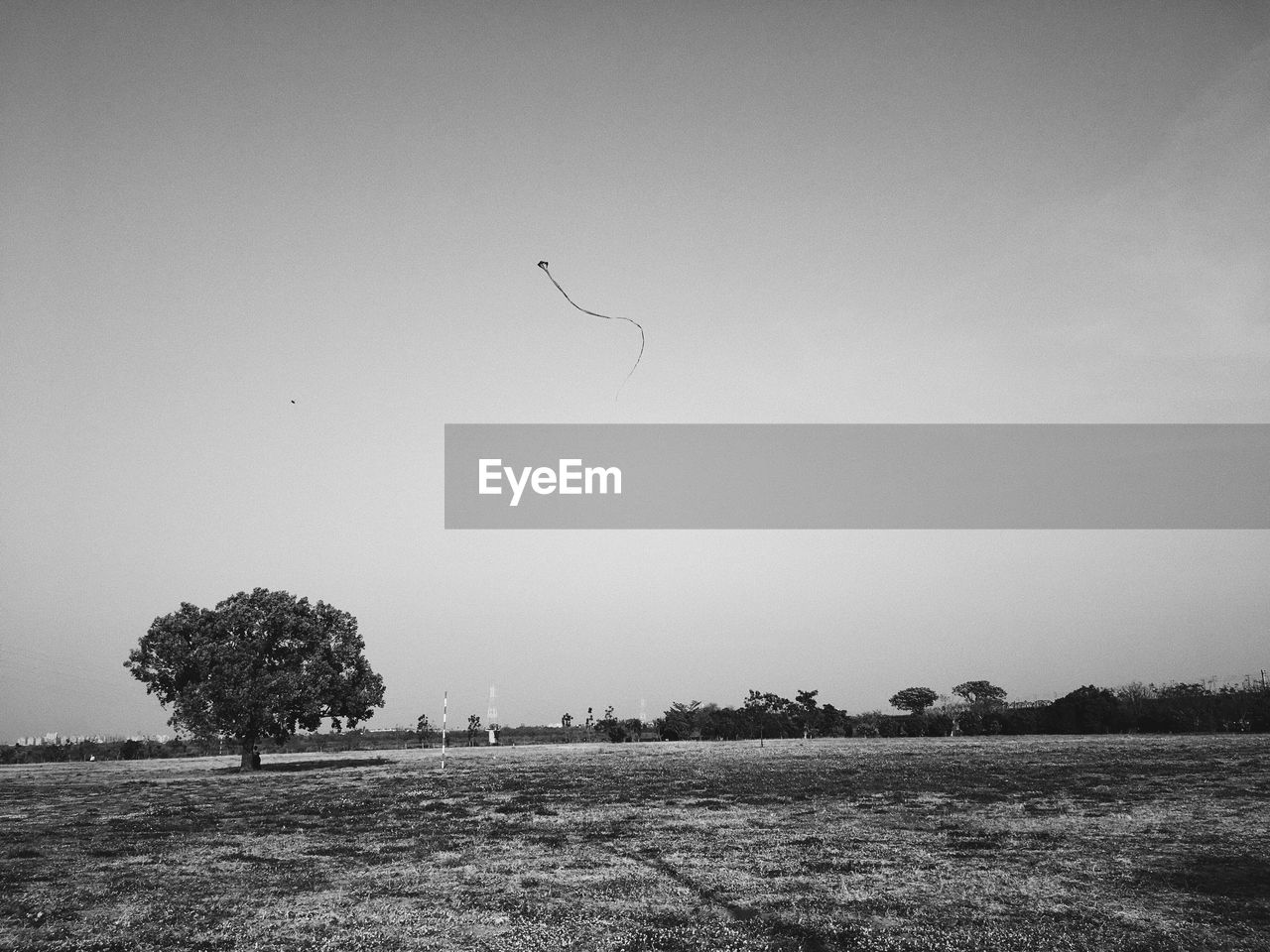 tree, field, nature, beauty in nature, landscape, tranquil scene, scenics, tranquility, outdoors, animal themes, day, one animal, bird, no people, clear sky, grass, flying, animals in the wild, sky