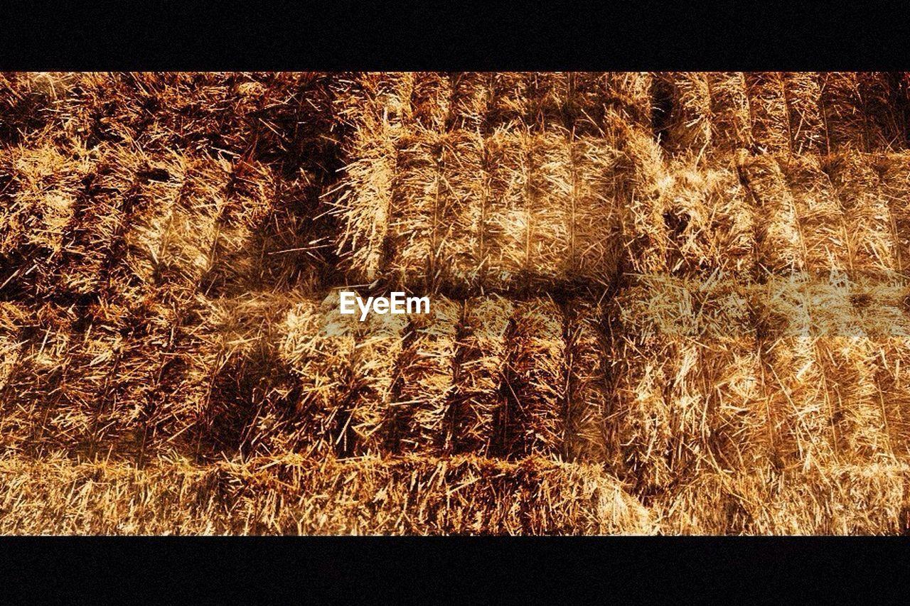 Close-up of hay bales