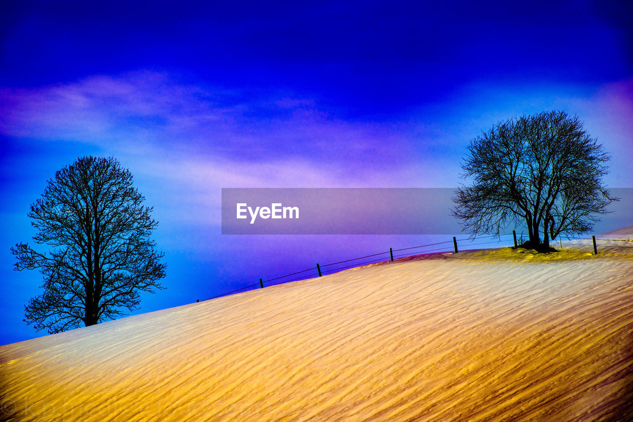 tree, beauty in nature, nature, tranquil scene, landscape, tranquility, scenics, blue, bare tree, sky, outdoors, cold temperature, winter, no people, field, snow, day, rural scene