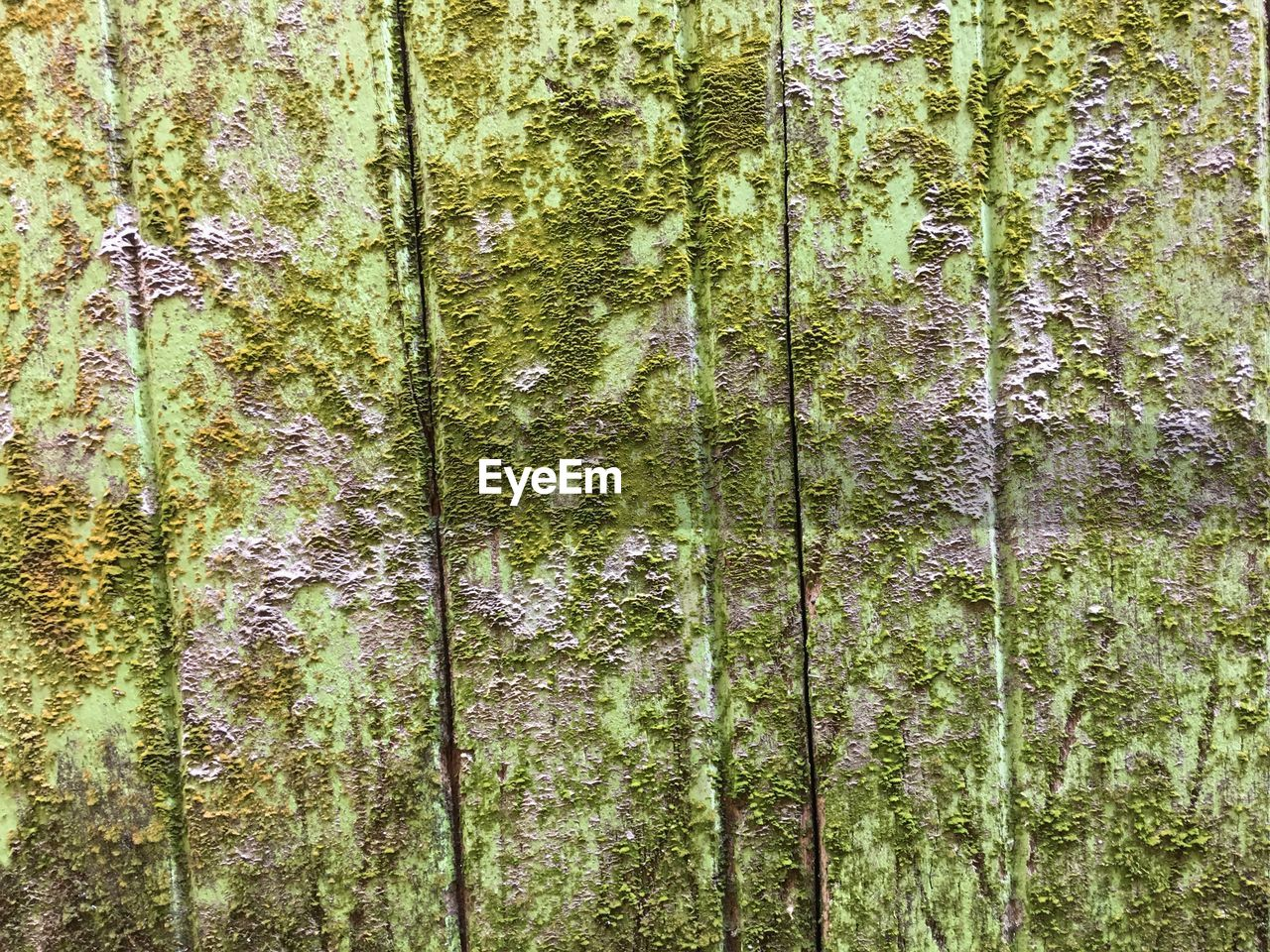 full frame, backgrounds, plant, tree, textured, tree trunk, trunk, no people, wood - material, pattern, close-up, growth, green color, moss, day, weathered, nature, rough, forest, run-down, outdoors, lichen, deterioration, textured effect