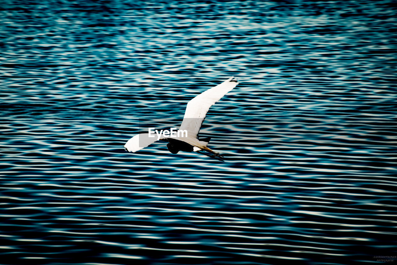 animal wildlife, bird, water, animals in the wild, animal themes, vertebrate, flying, animal, waterfront, one animal, spread wings, no people, rippled, nature, beauty in nature, lake, day, water bird, outdoors, seagull