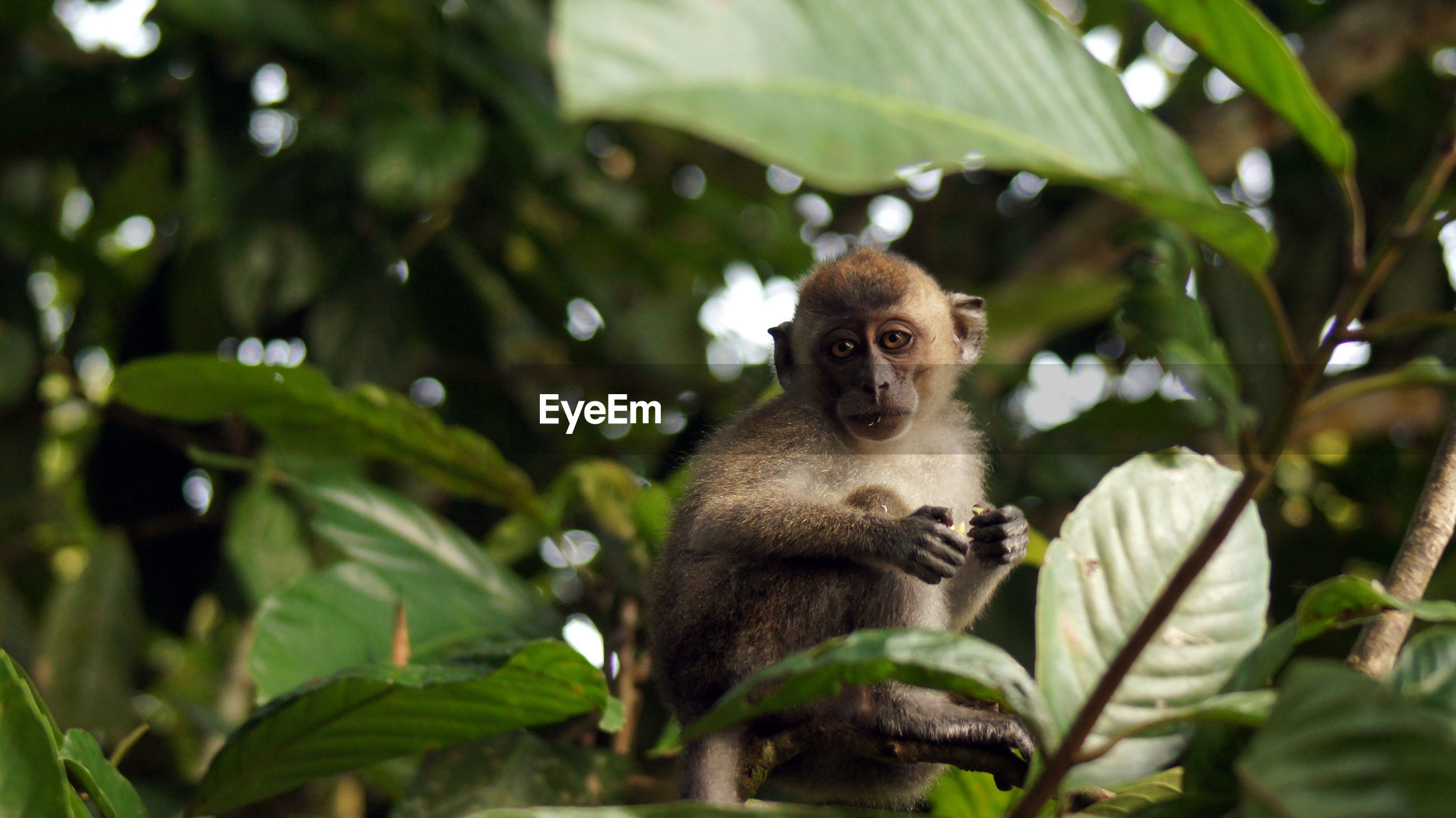 LOW ANGLE VIEW OF MONKEY SITTING ON PLANT