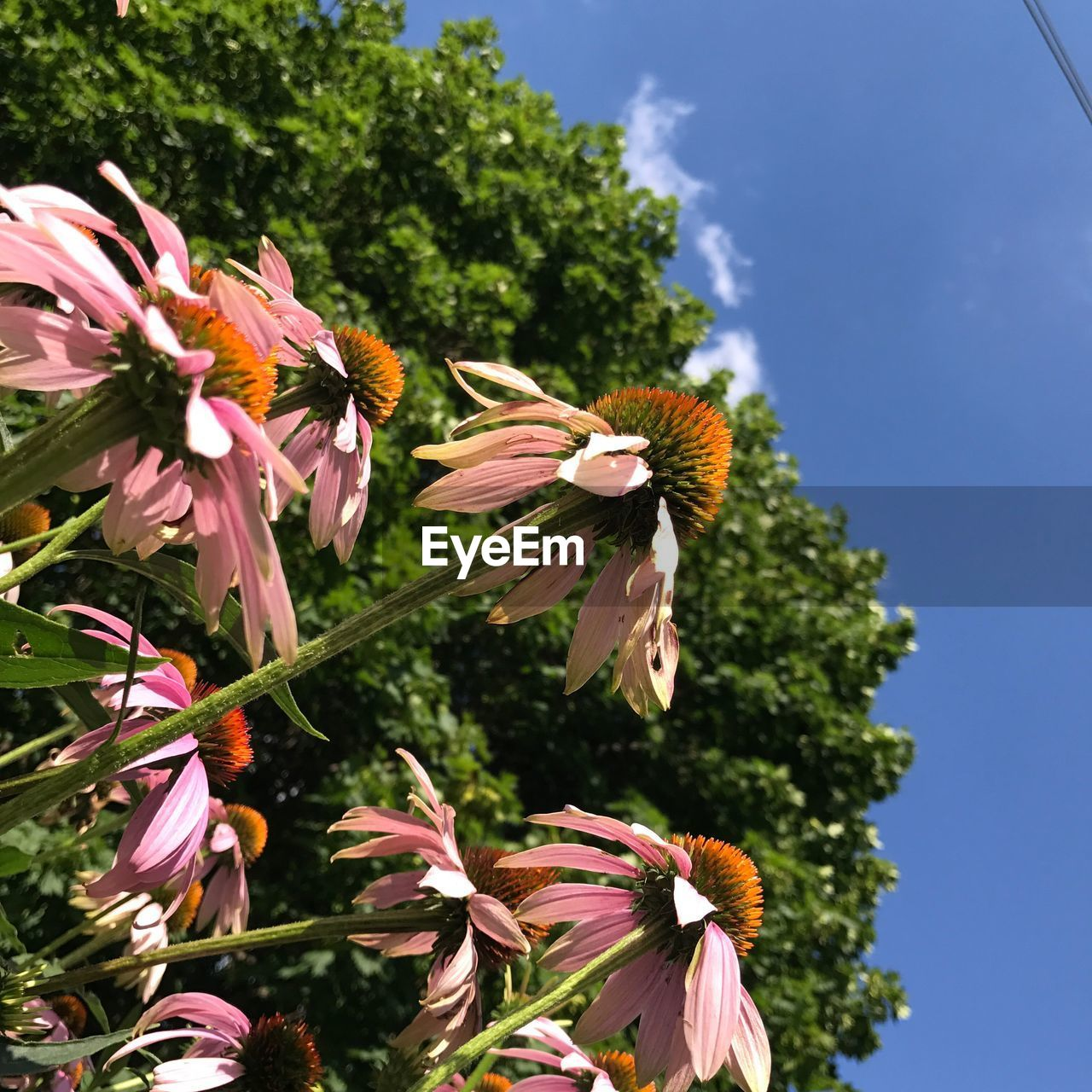 Low Angle View Of Flowers Blooming Against Sky