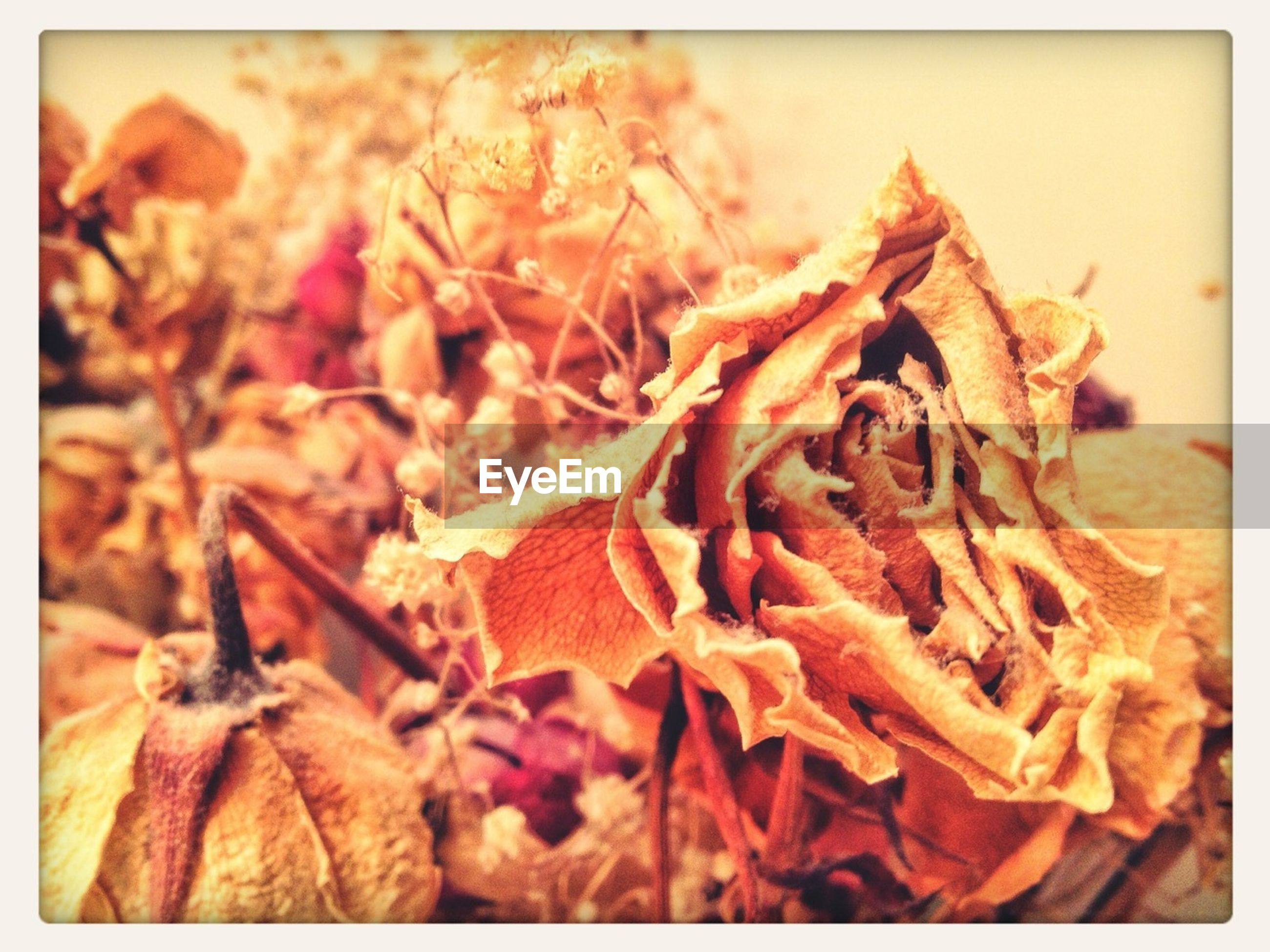 transfer print, auto post production filter, close-up, dry, food and drink, focus on foreground, autumn, freshness, leaf, food, brown, nature, selective focus, no people, orange color, change, healthy eating, day, outdoors, dead plant