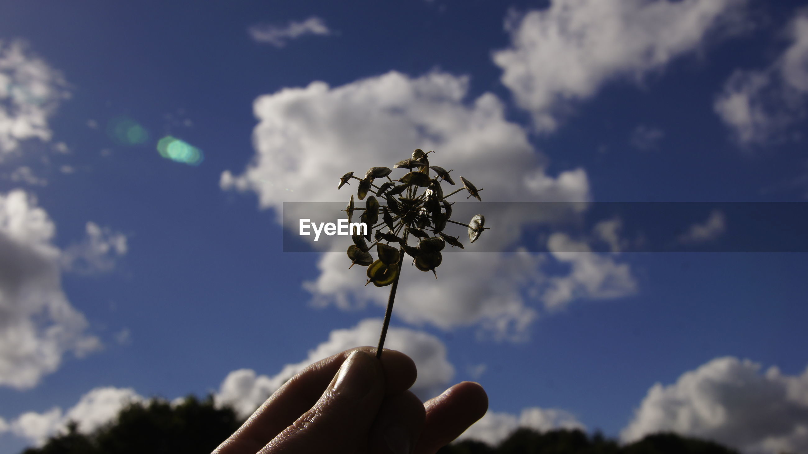 Cropped hand of person holding plant against cloudy sky