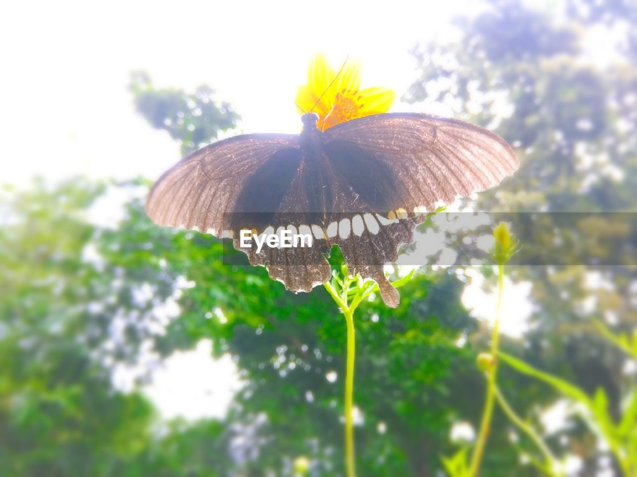 plant, flower, flowering plant, freshness, beauty in nature, fragility, vulnerability, close-up, nature, flower head, growth, inflorescence, animal wing, butterfly - insect, day, petal, invertebrate, no people, insect, animals in the wild, outdoors, butterfly, pollination