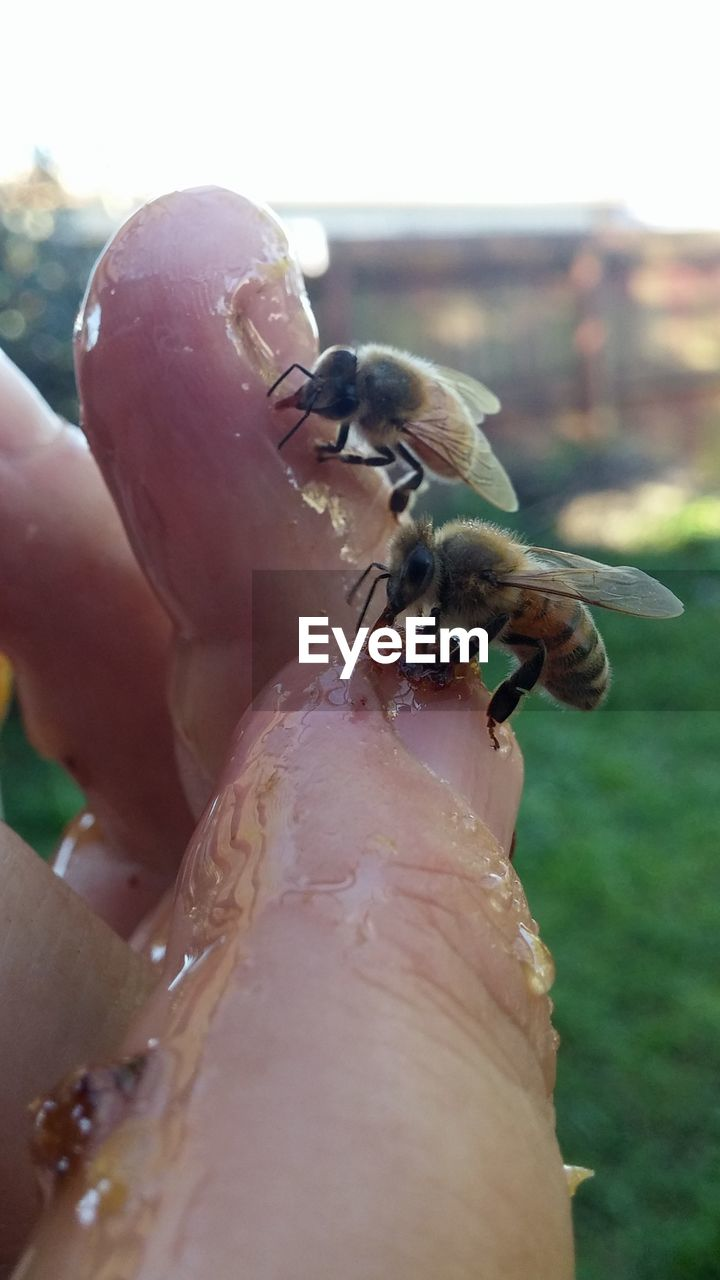 animal themes, animals in the wild, insect, one animal, human hand, human body part, human finger, close-up, outdoors, day, animal wildlife, real people, one person, holding, nature, focus on foreground, tiny, bee, ladybug, fragility, people