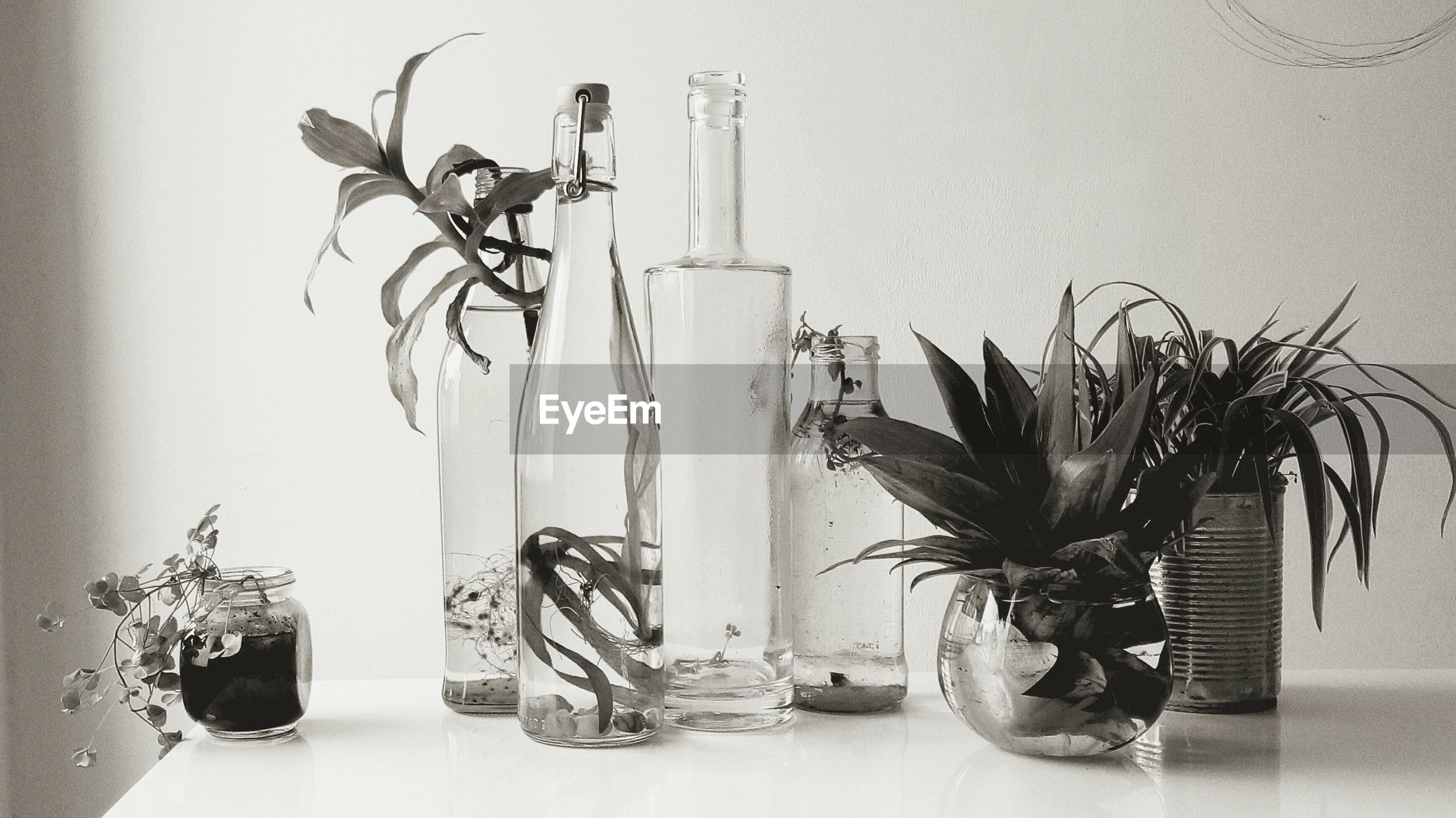 indoors, wall - building feature, potted plant, still life, bicycle, wall, table, metal, no people, plant, home interior, hanging, stationary, close-up, high angle view, built structure, day, shadow, architecture, vase