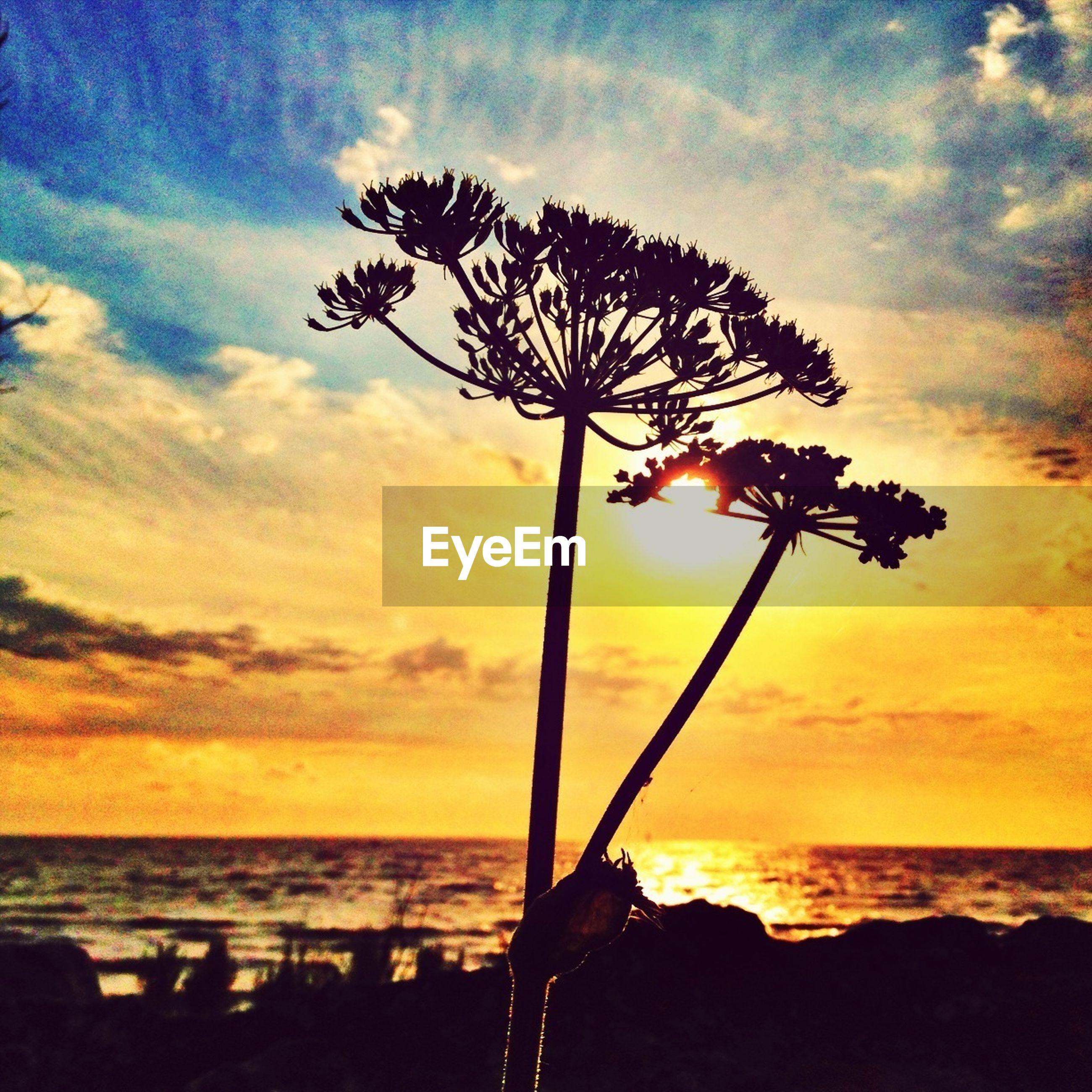 sunset, horizon over water, sea, sky, beauty in nature, scenics, water, tranquility, tranquil scene, silhouette, nature, orange color, cloud - sky, beach, tree, idyllic, cloud, sun, palm tree, tree trunk