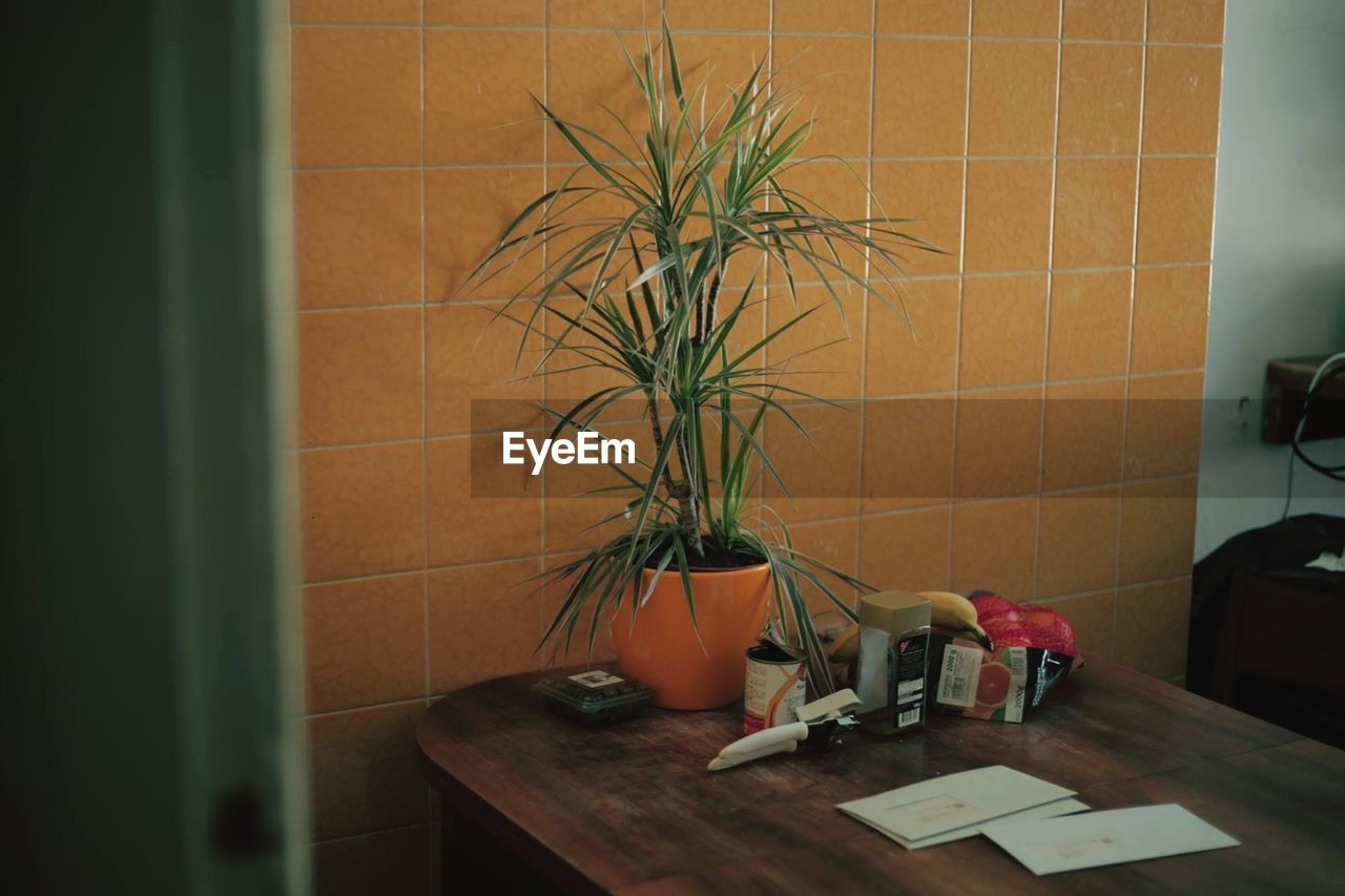 POTTED PLANTS IN THE ROOM