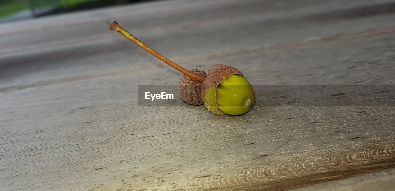 close-up, focus on foreground, day, no people, snail, food, fruit, still life, mollusk, outdoors, yellow, one animal, food and drink, acorn, invertebrate, wood - material, gastropod, animal wildlife, animal themes, green color