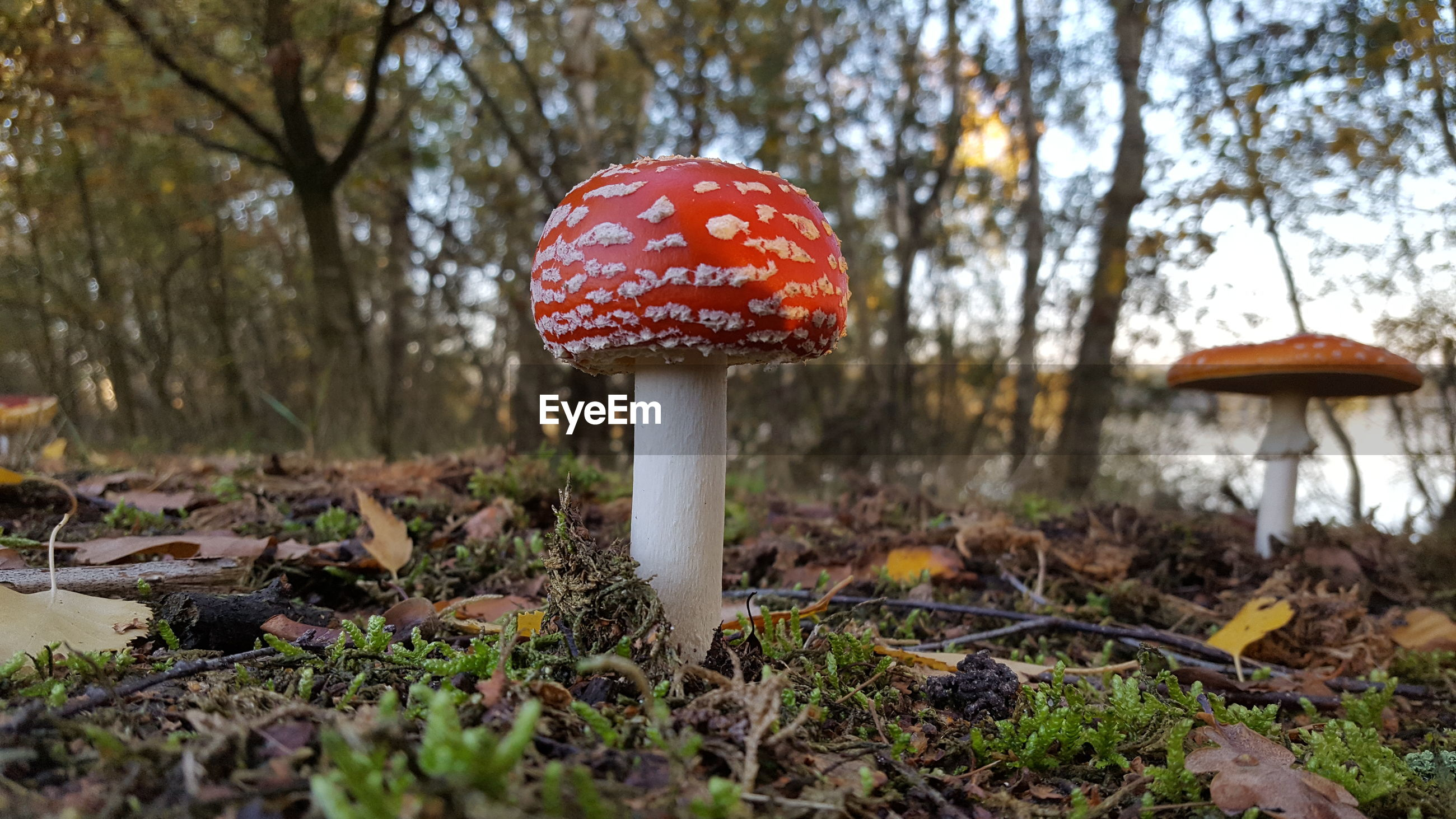 CLOSE-UP OF MUSHROOM ON FIELD BY TREES