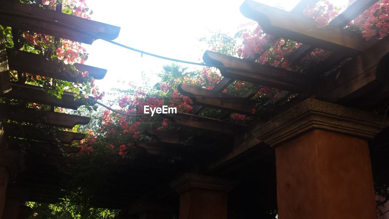 Low angle view of plants on roof