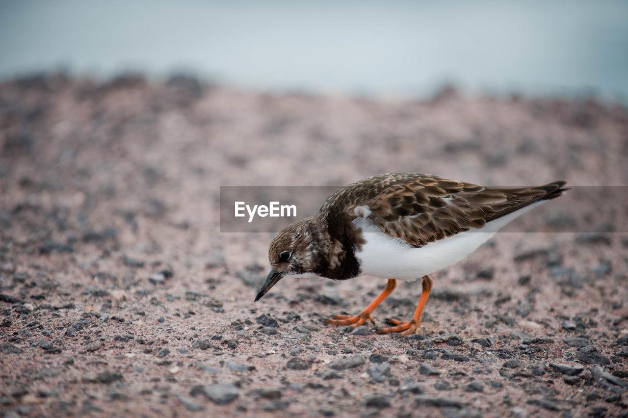 Bird standing on ground