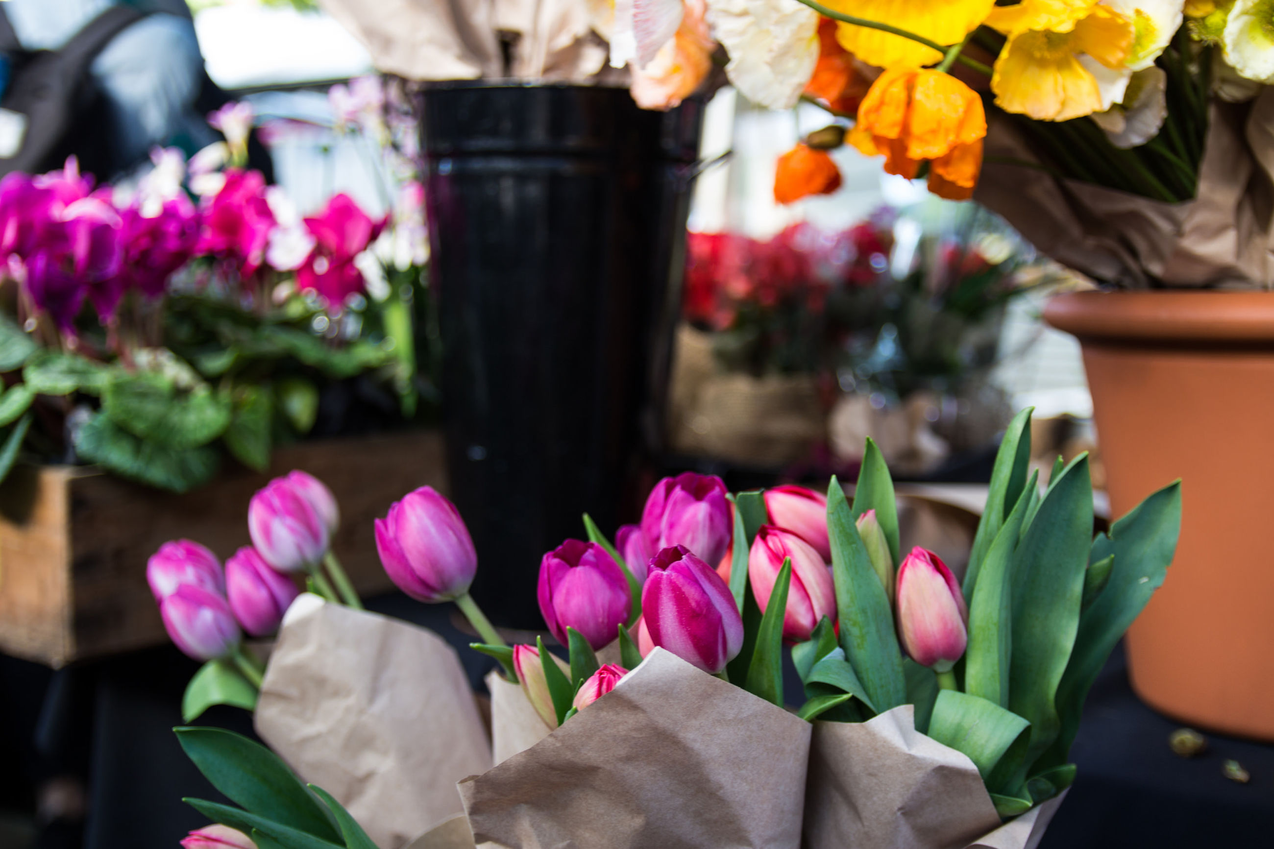 Close-up of tulips wrapped in paper in market