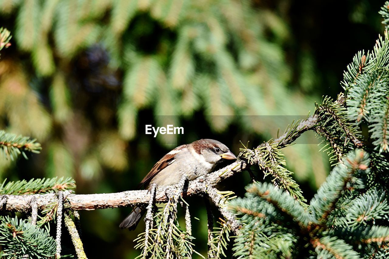 close-up, day, focus on foreground, animals in the wild, one animal, no people, animal themes, animal wildlife, animal, nature, plant, selective focus, tree, invertebrate, outdoors, animal body part, insect, branch, green color, sunlight, coniferous tree