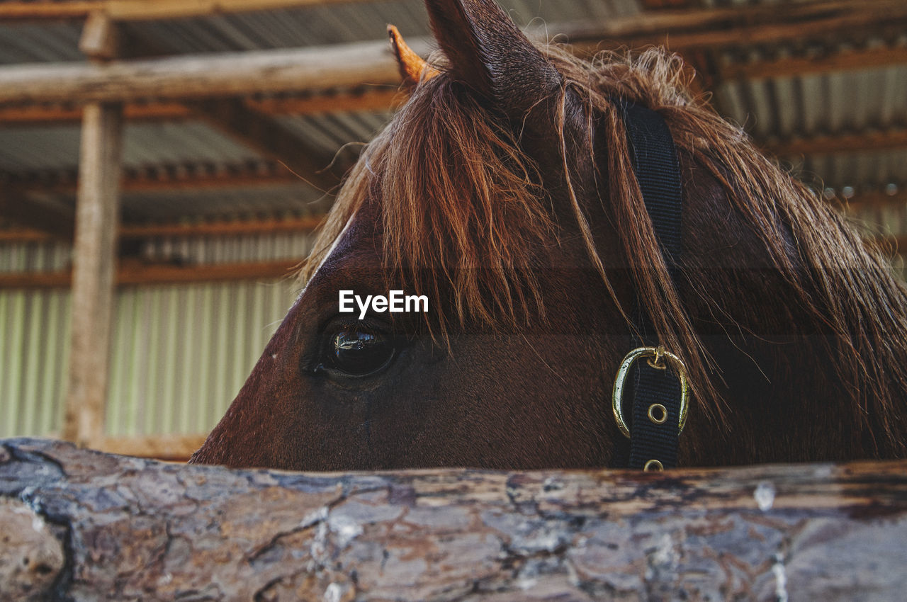horse, domestic animals, animal themes, one animal, mammal, brown, day, animal head, livestock, close-up, no people, built structure, outdoors