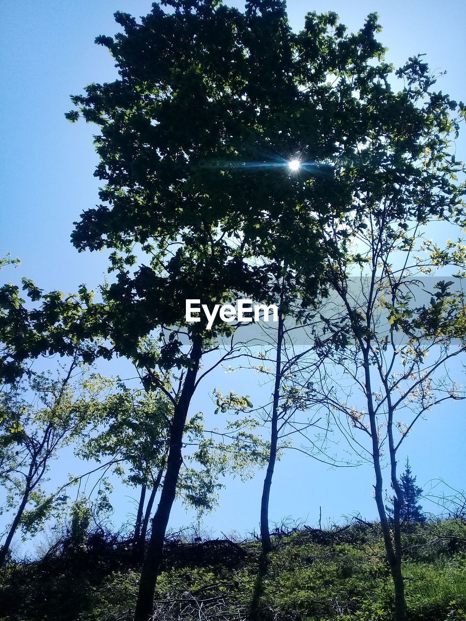 tree, plant, sky, beauty in nature, tranquility, tranquil scene, growth, low angle view, no people, land, nature, scenics - nature, sunlight, day, outdoors, clear sky, non-urban scene, forest, branch, environment