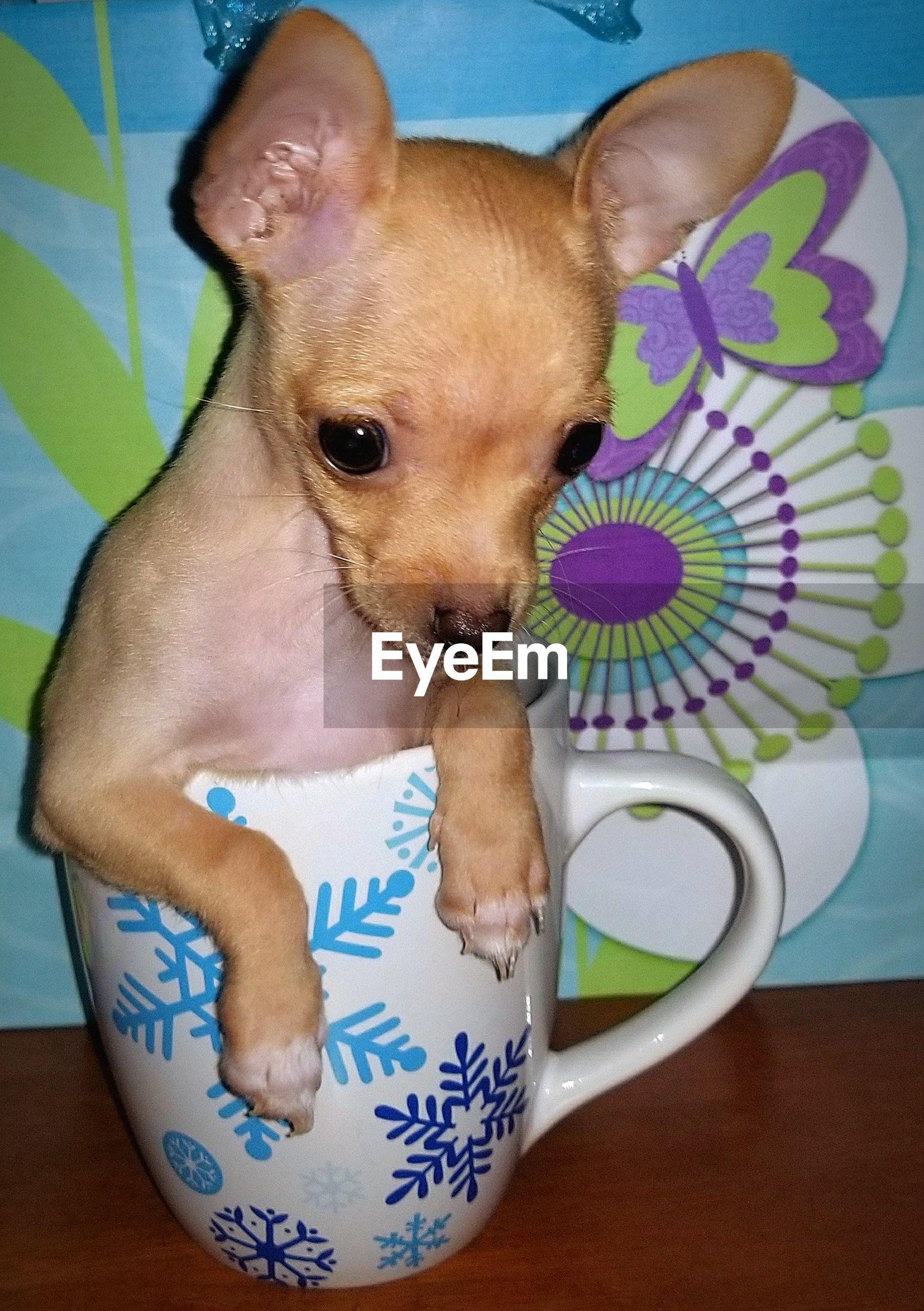 Dog mug - perro en taza