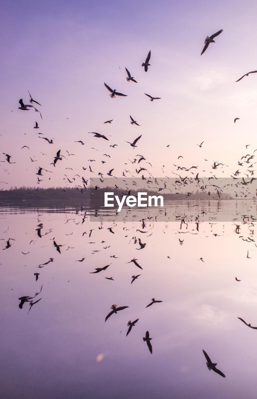 Flock of birds flying over lake against sky during sunset
