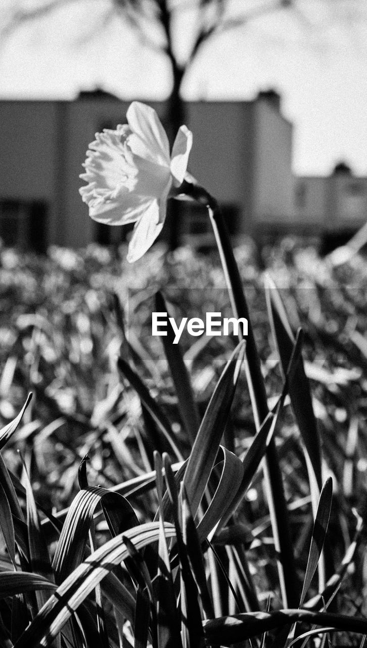 flower, petal, growth, flower head, focus on foreground, fragility, plant, beauty in nature, no people, day, nature, blooming, freshness, outdoors, close-up