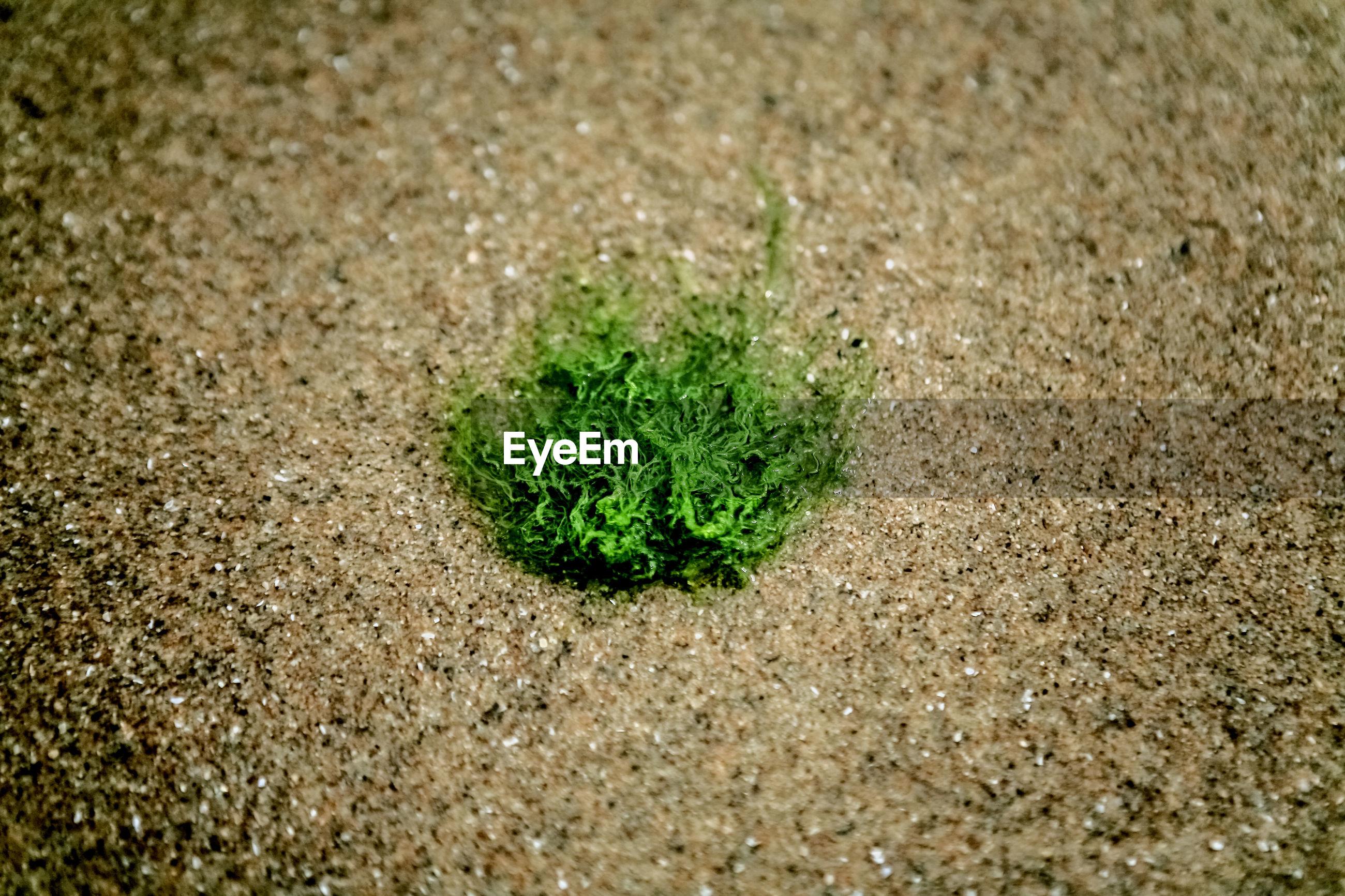 High angle view of seaweed on sandy beach