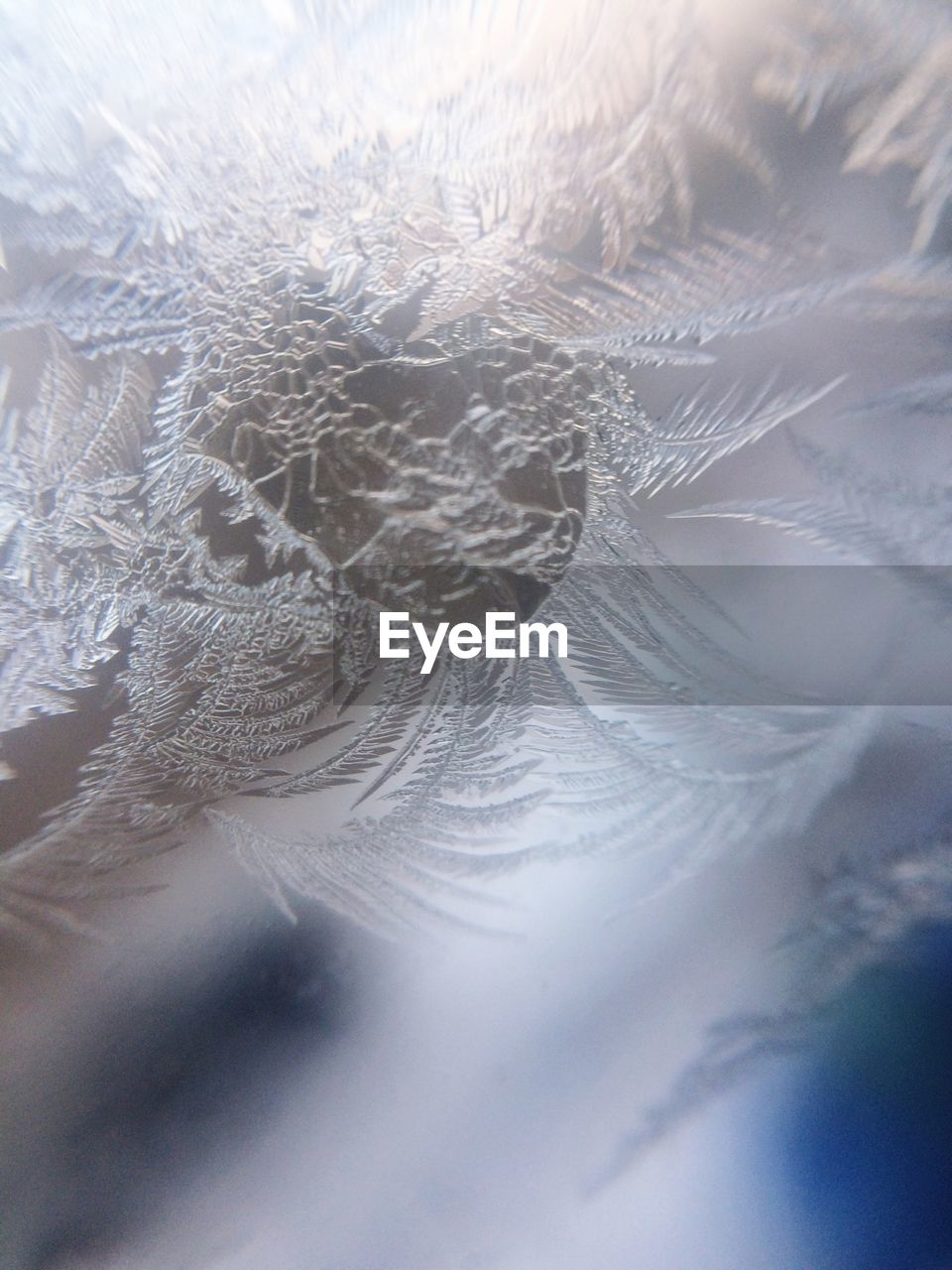 close-up, no people, backgrounds, winter, full frame, fragility, indoors, cold temperature, day, nature, beauty in nature, water, freshness