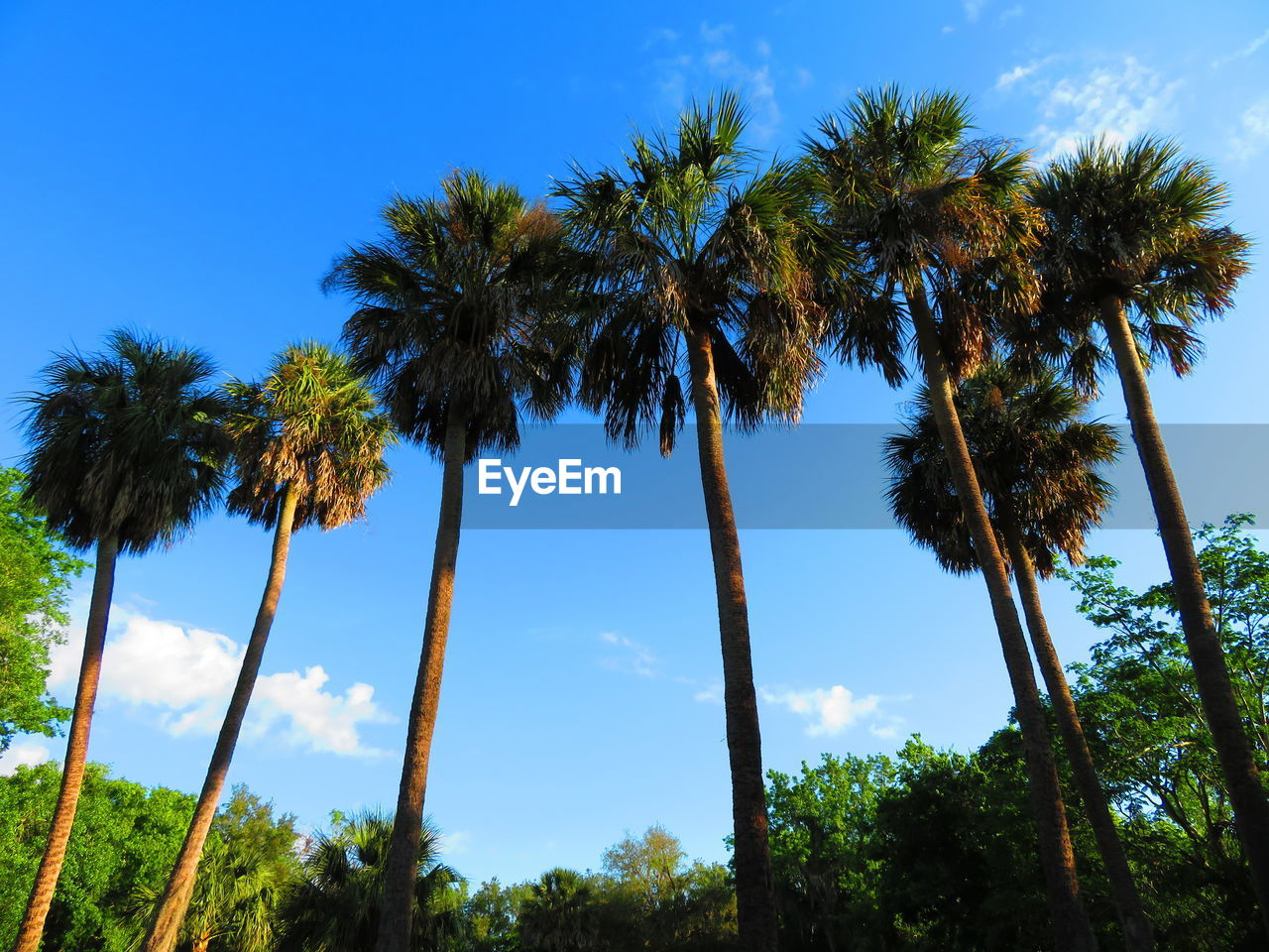 tree, plant, sky, low angle view, growth, beauty in nature, tropical climate, palm tree, no people, tall - high, tree trunk, trunk, nature, scenics - nature, tranquility, tranquil scene, day, land, coconut palm tree, non-urban scene, outdoors, tropical tree