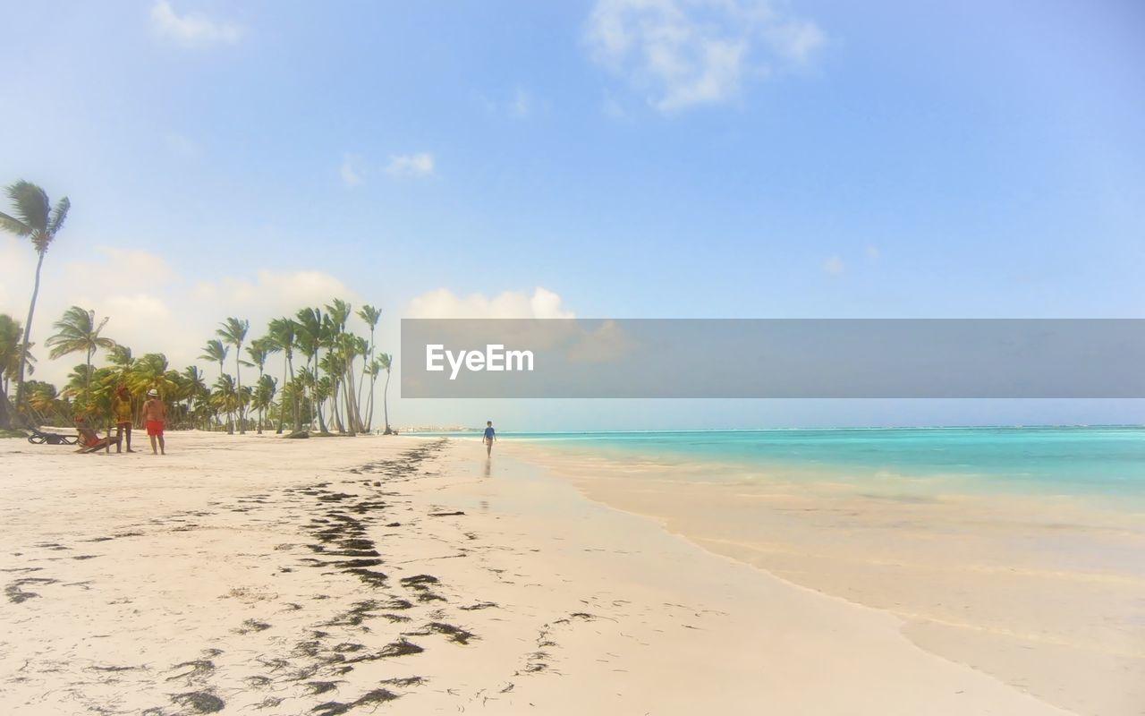 beach, sea, sand, sky, horizon over water, shore, nature, beauty in nature, scenics, tranquil scene, water, tranquility, day, outdoors, vacations, tree, palm tree, no people