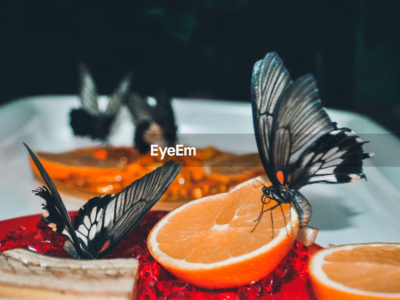 Close-Up Of Butterfly On Orange Fruit