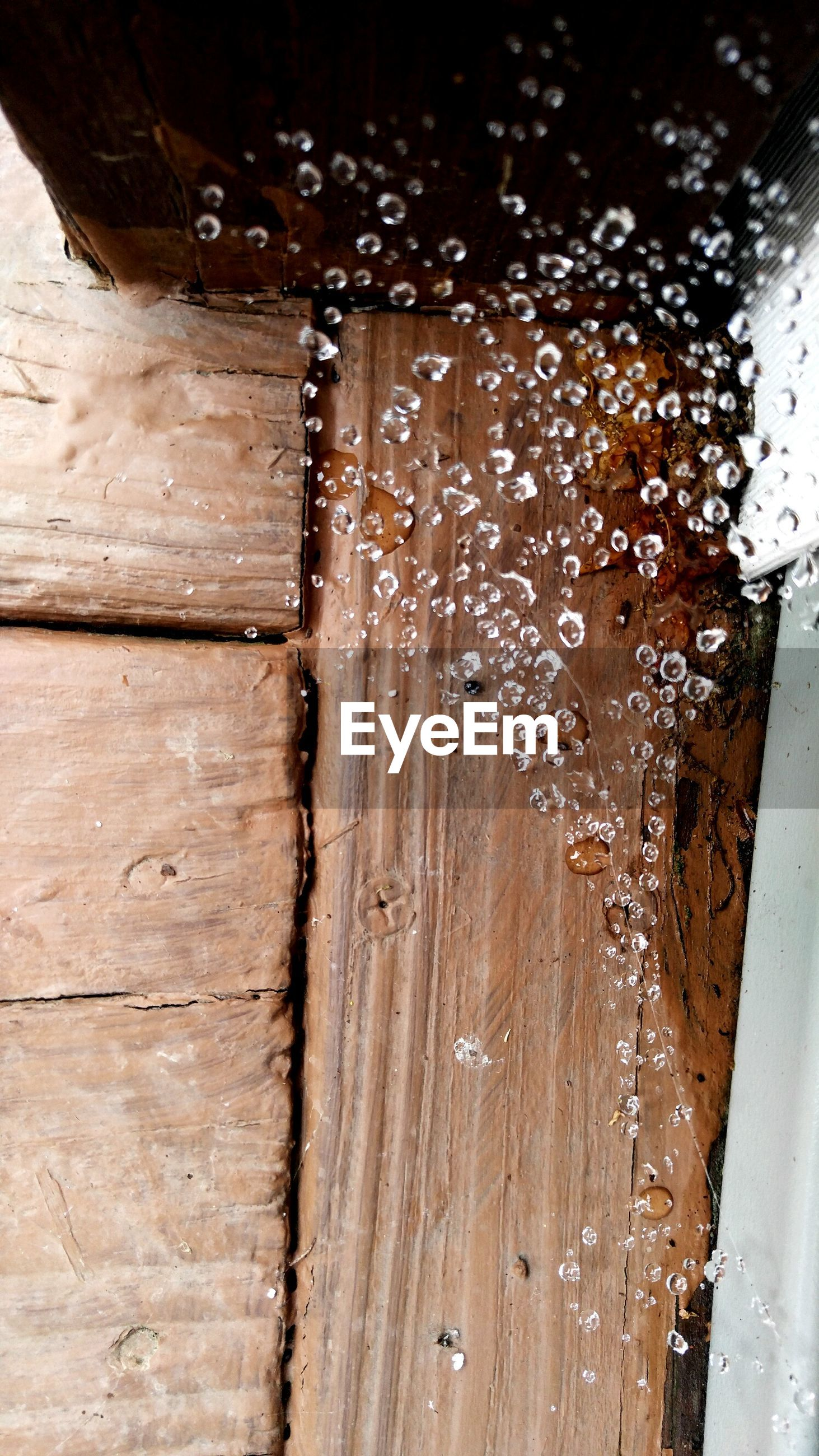 Close-up of wet spider web by wooden wall