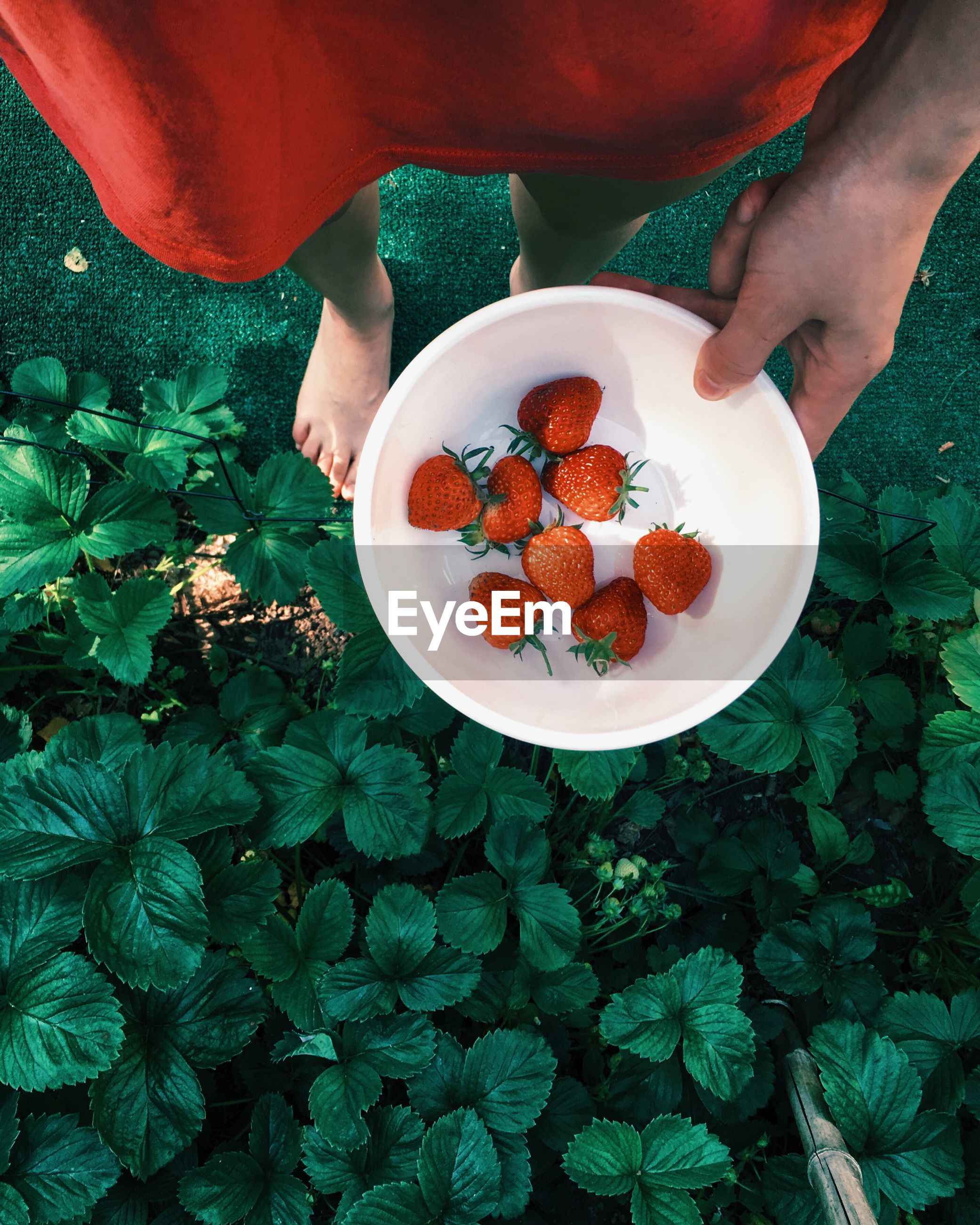 Low section of woman holding strawberries in bowl