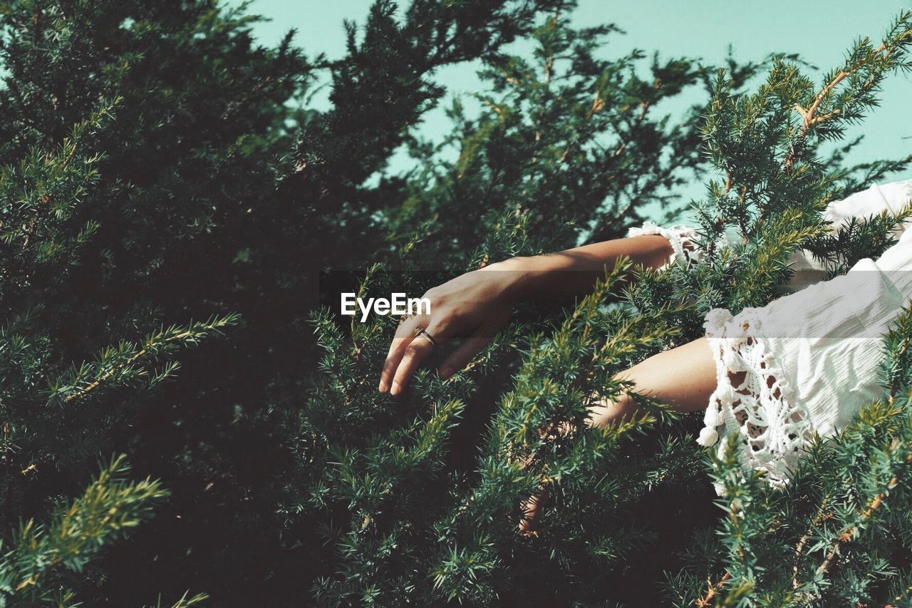 Cropped Hands Amidst Trees