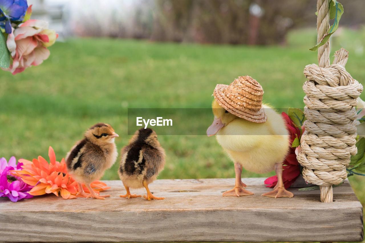 Close-Up Of Birds Outdoors
