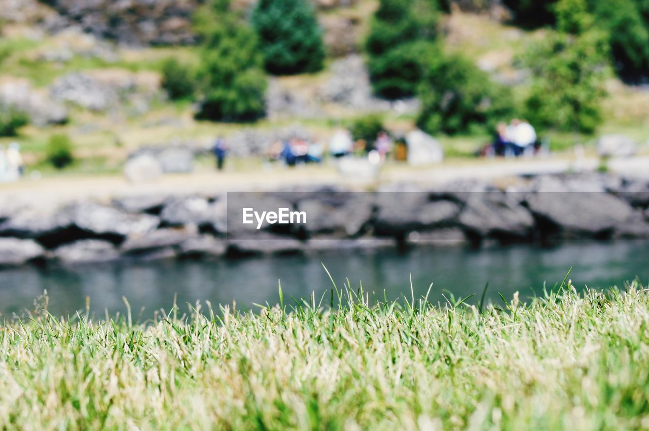 plant, grass, nature, water, growth, day, beauty in nature, green color, tranquility, land, selective focus, lake, no people, field, tranquil scene, scenics - nature, outdoors, focus on foreground