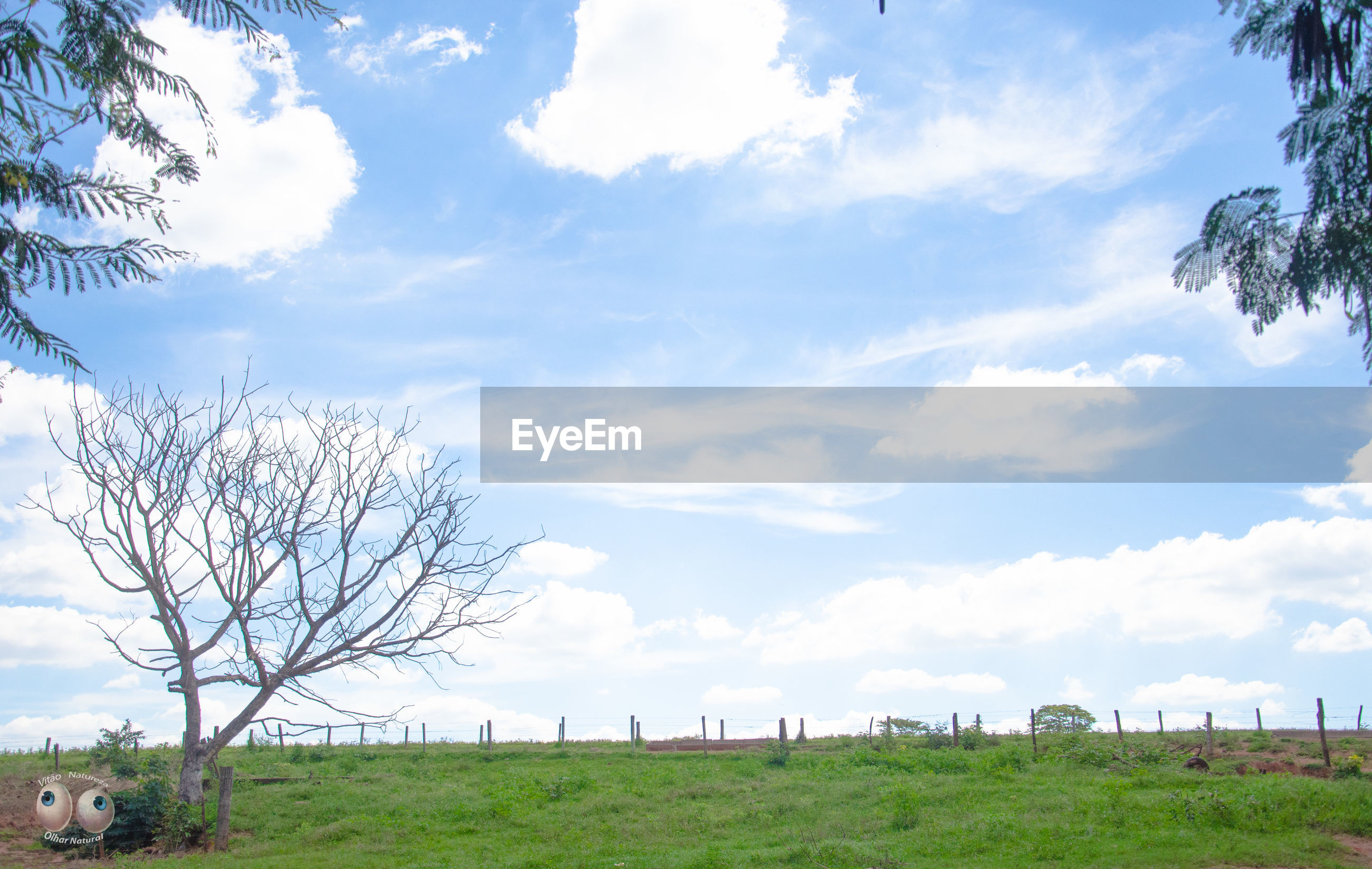 sky, tree, cloud - sky, grass, field, tranquility, landscape, tranquil scene, cloud, scenics, beauty in nature, nature, growth, cloudy, rural scene, grassy, branch, day, blue, horizon over land