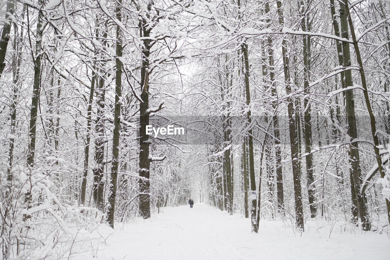 winter, snow, cold temperature, nature, beauty in nature, tranquility, no people, tranquil scene, tree, forest, outdoors, scenics, day, landscape