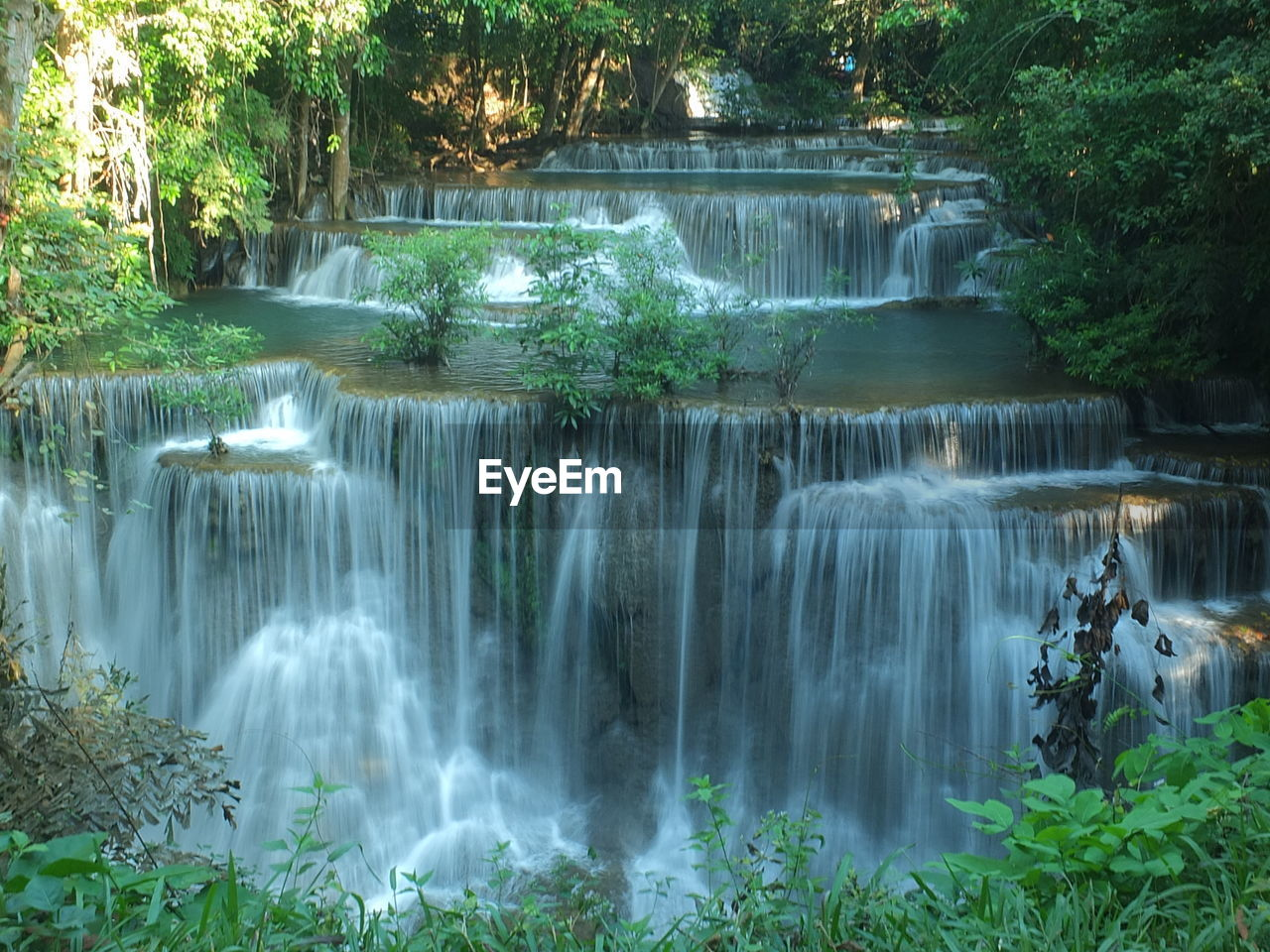plant, scenics - nature, water, beauty in nature, waterfall, tree, forest, nature, long exposure, flowing water, motion, environment, flowing, no people, blurred motion, day, rainforest, growth, outdoors, power in nature, falling water