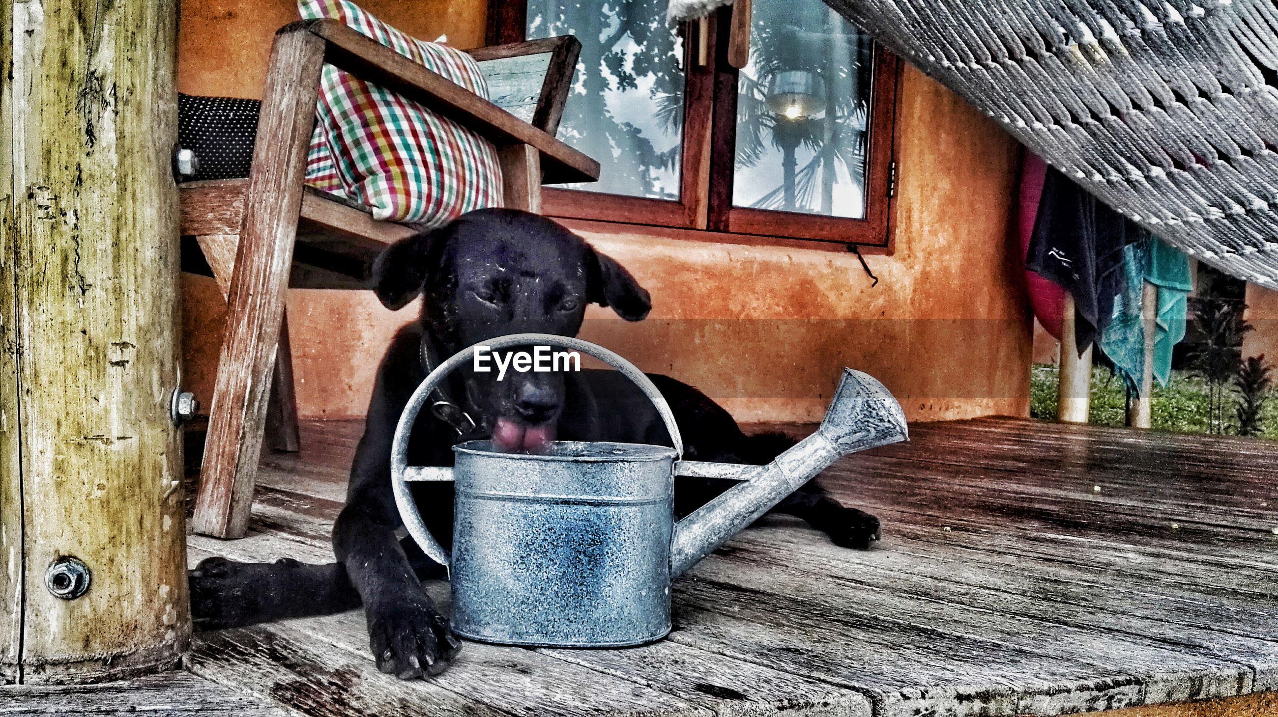 DOG SITTING IN BARN IN HOUSE