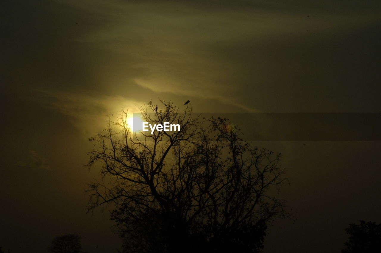 tree, nature, sun, beauty in nature, bare tree, silhouette, sky, sunset, scenics, no people, outdoors, branch, moon, tranquility, tranquil scene, low angle view, day