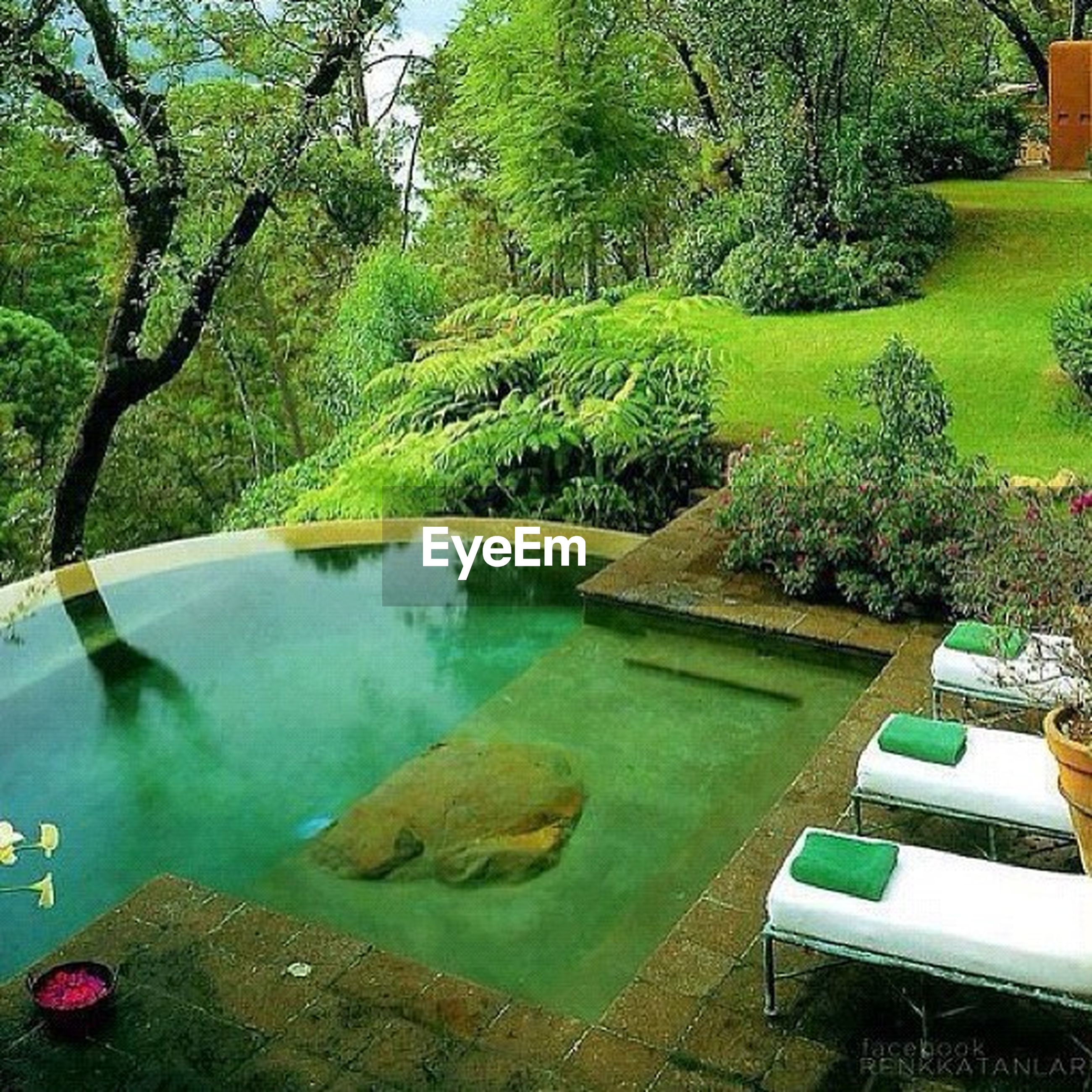 tree, water, green color, swimming pool, tranquility, growth, nature, high angle view, reflection, tranquil scene, pond, built structure, plant, day, beauty in nature, no people, grass, park - man made space, outdoors, absence