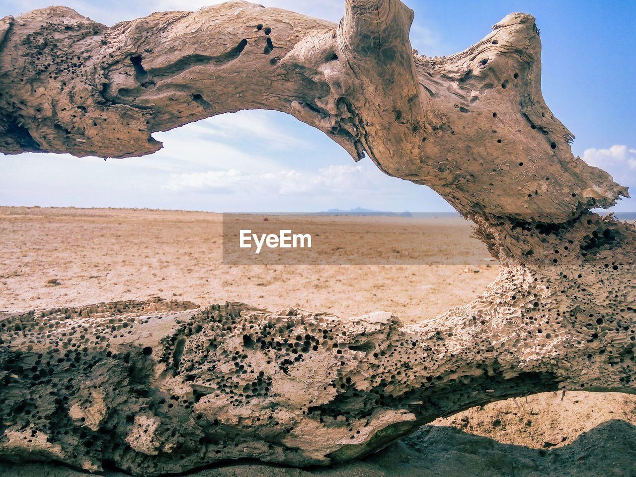 Fallen tree at beach against sky
